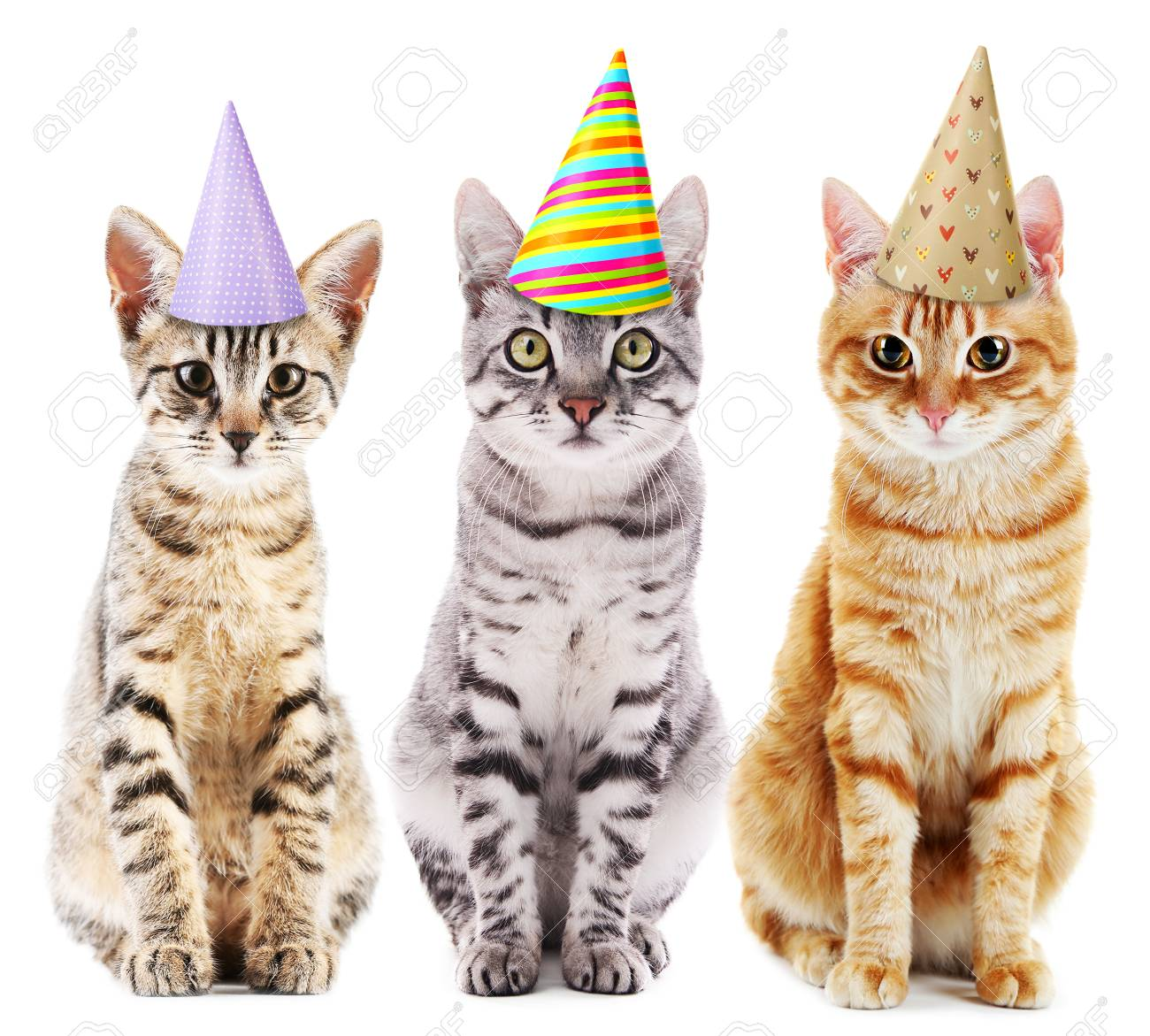 Three cute cats in colorful party hats, isolated on white