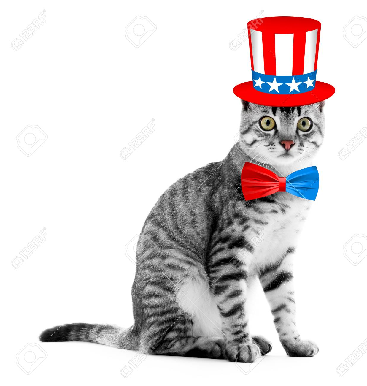 Cute Cat With Uncle Sam Hat And Bow Tie On White Background