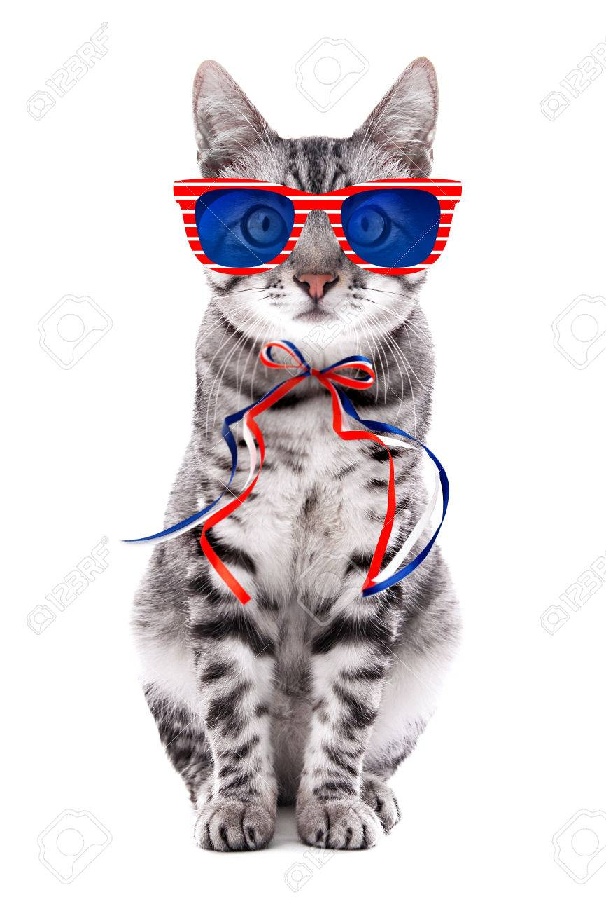 Cute Cat With Sunglasses And Bow On White Background Usa Holiday