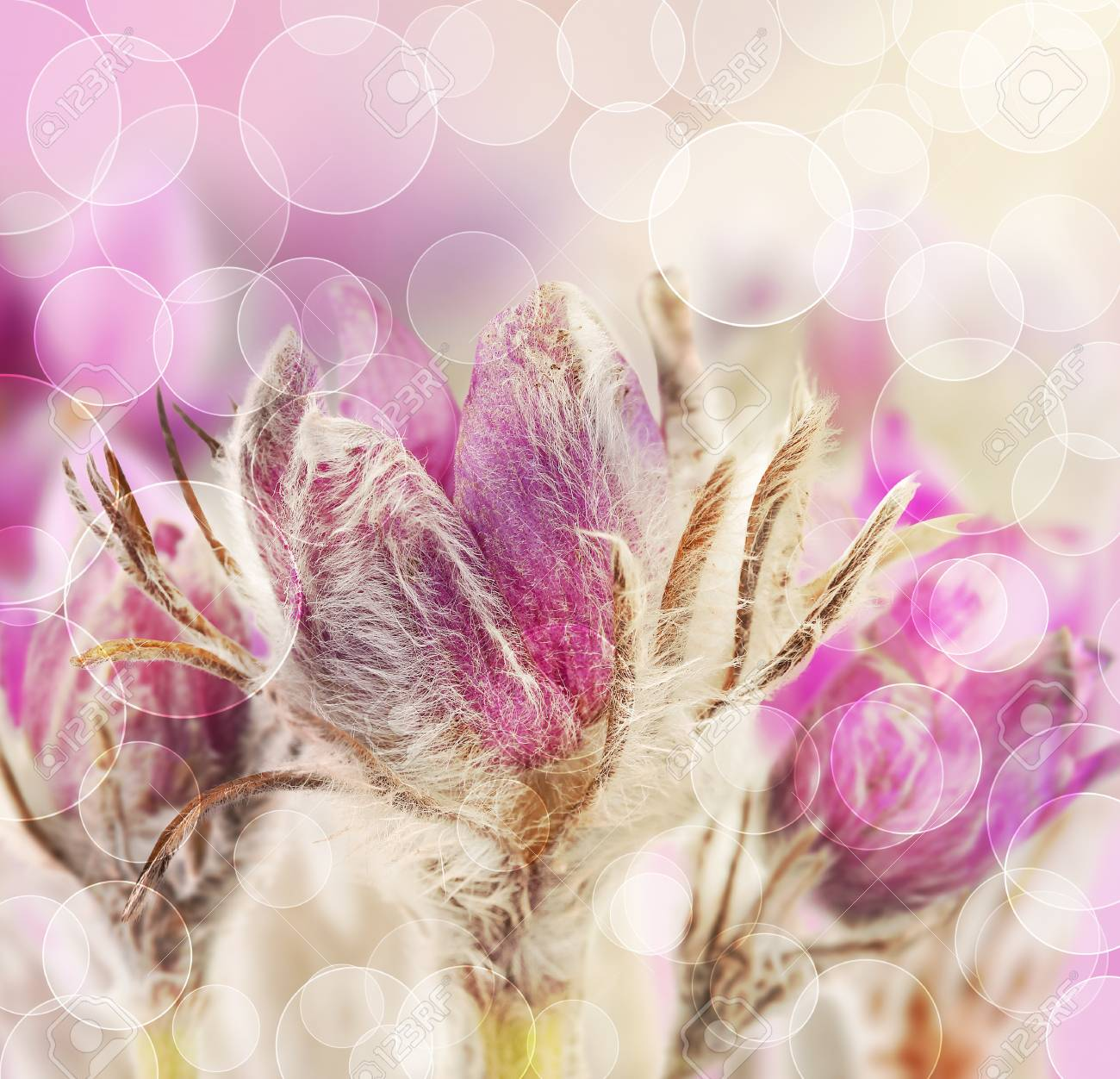 Beautiful Flowers On Beautiful Bokeh Background With Color Filter