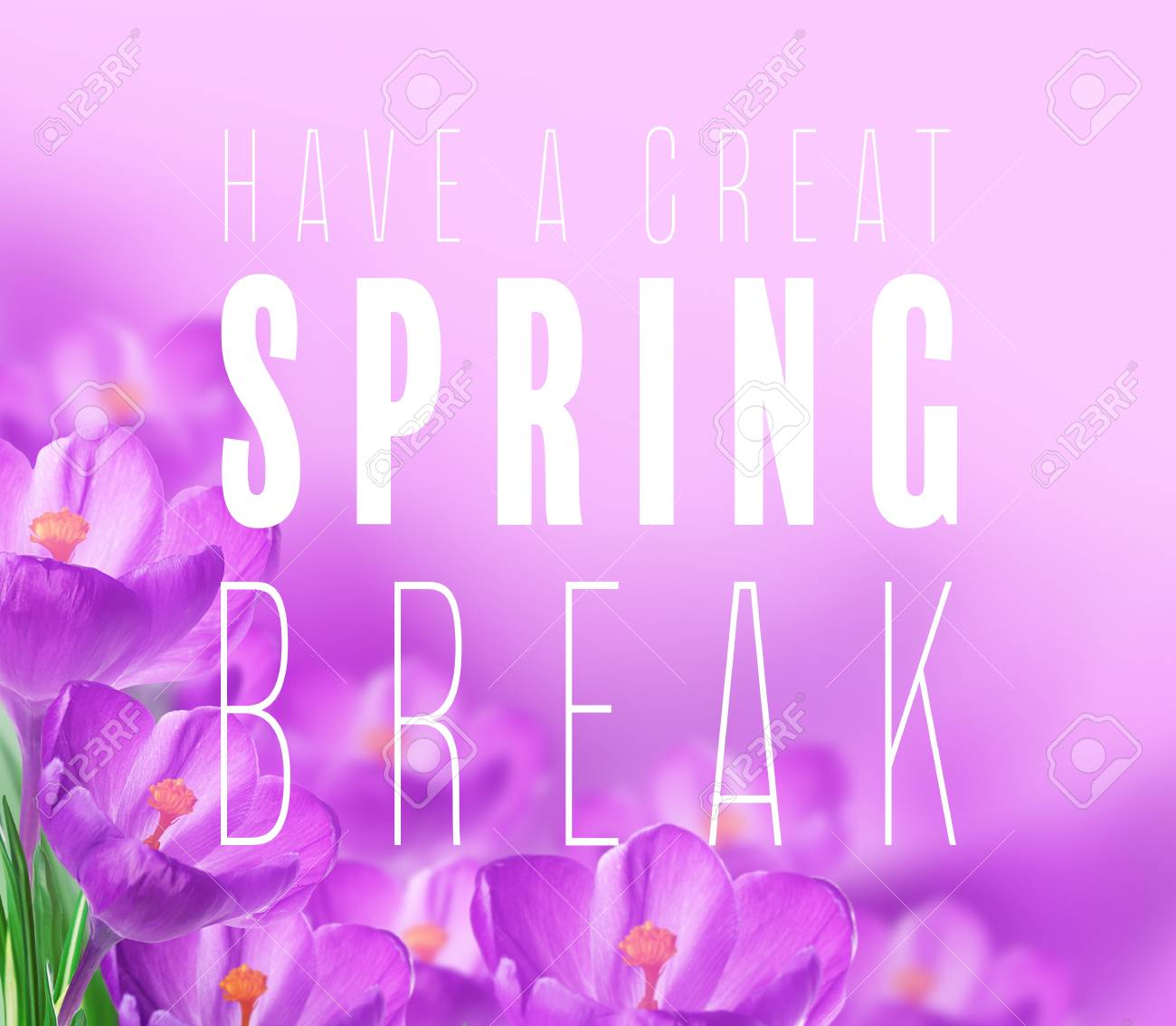 Text have a great spring break and flowers on color background stock photo text have a great spring break and flowers on color background additional education concept mightylinksfo