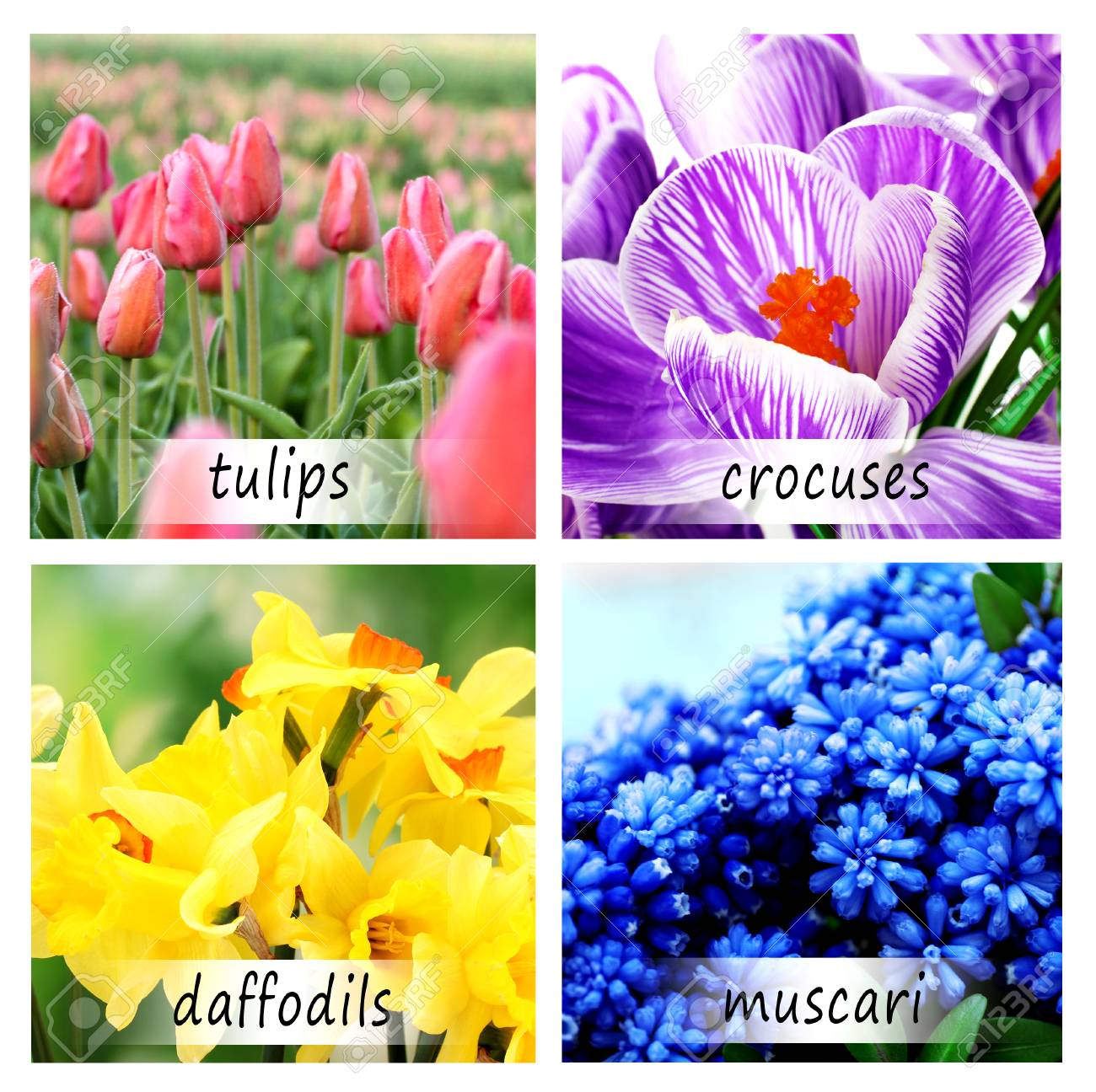 Collage of beautiful flowers with names stock photo picture and collage of beautiful flowers with names stock photo 91243216 mightylinksfo