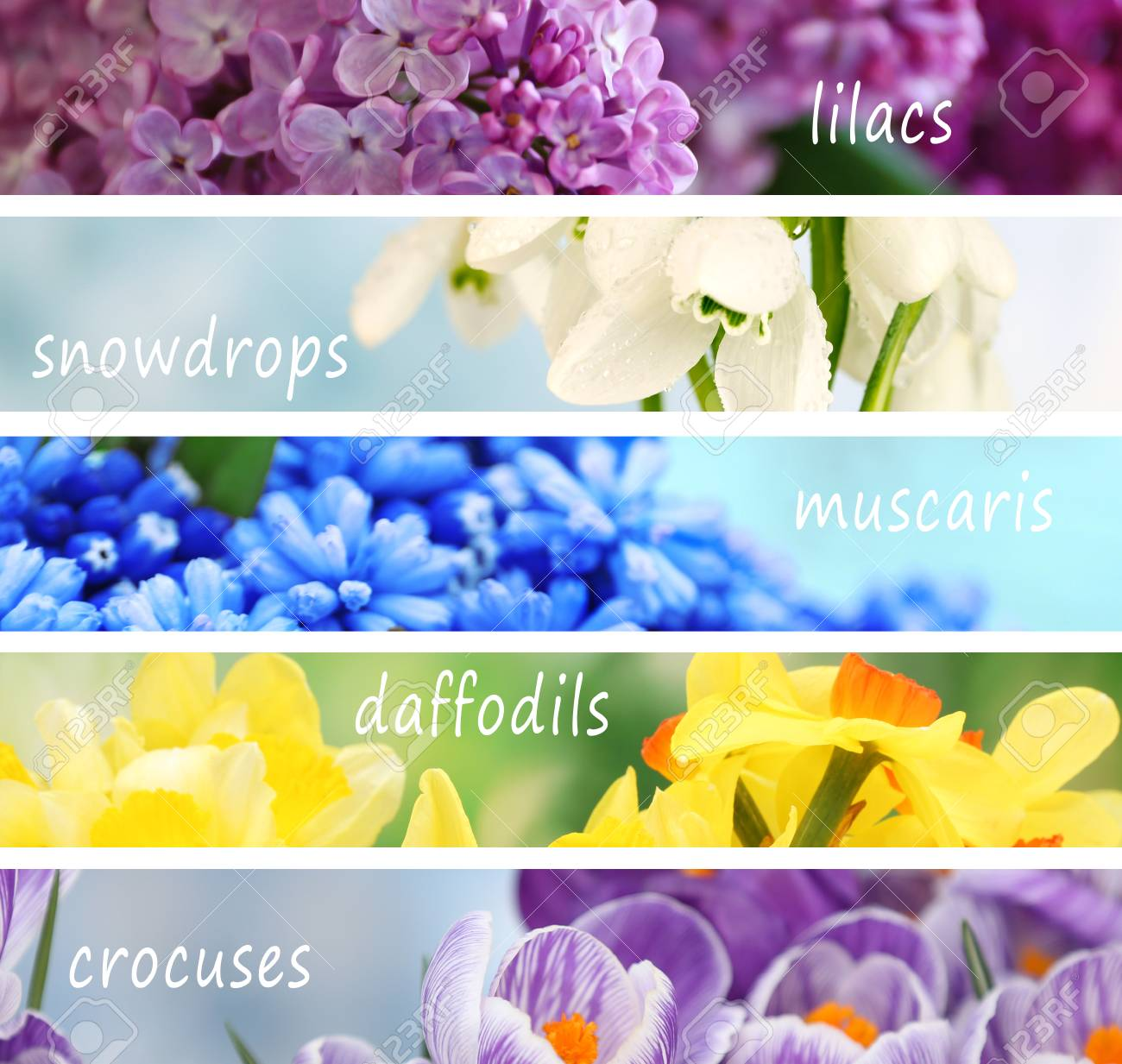 Collage of beautiful flowers with names stock photo picture and collage of beautiful flowers with names stock photo 91109245 izmirmasajfo