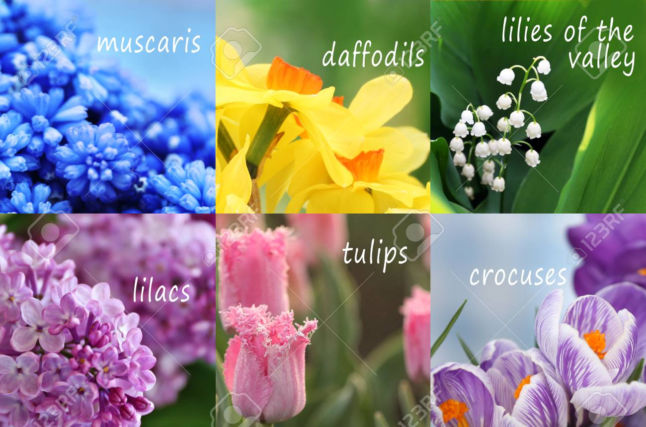 Collage of beautiful flowers with names stock photo picture and collage of beautiful flowers with names stock photo 91109275 mightylinksfo
