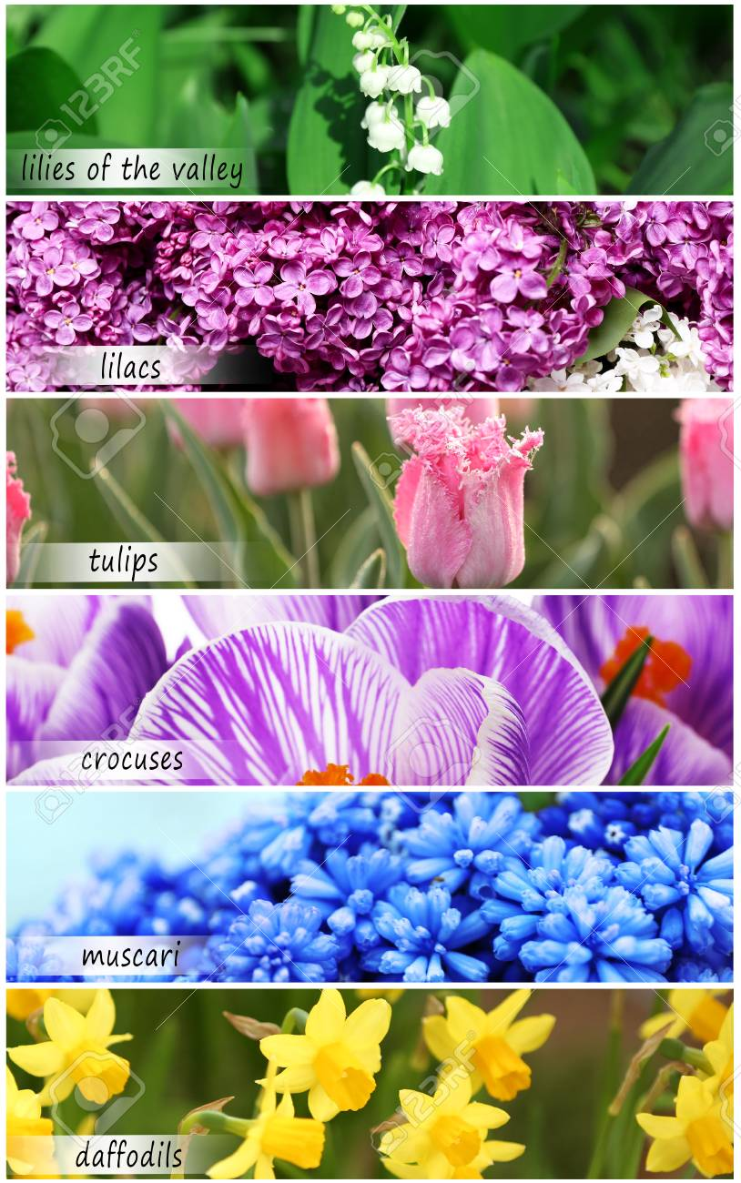 Collage Of Beautiful Flowers With Names Stock Photo Picture And