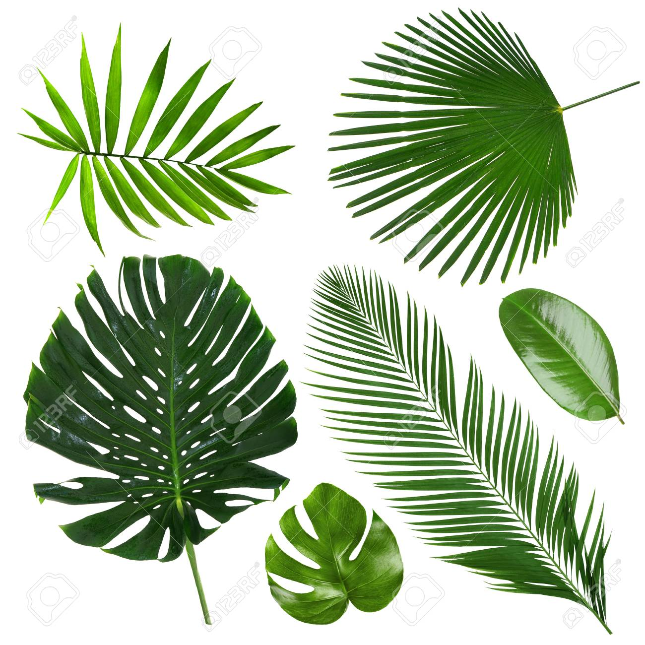 Different Tropical Leaves On White Background Stock Photo Picture And Royalty Free Image Image 91441082 4k and hd video ready for any nle immediately. 123rf com