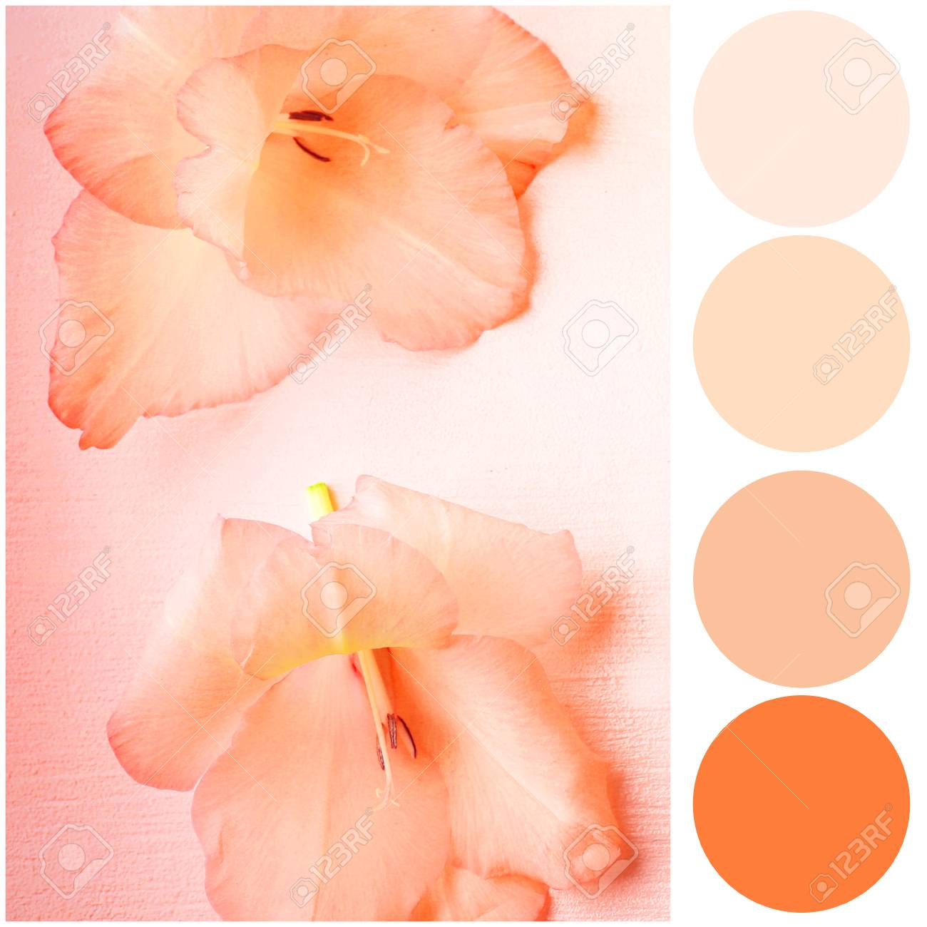 Apricot color matching palette  Beautiful flowers on textured