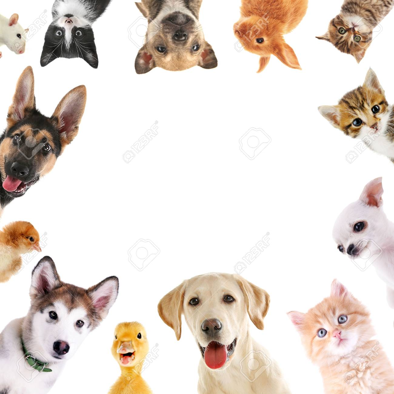 Collage Of Cute Baby Animals On White Background Stock Photo
