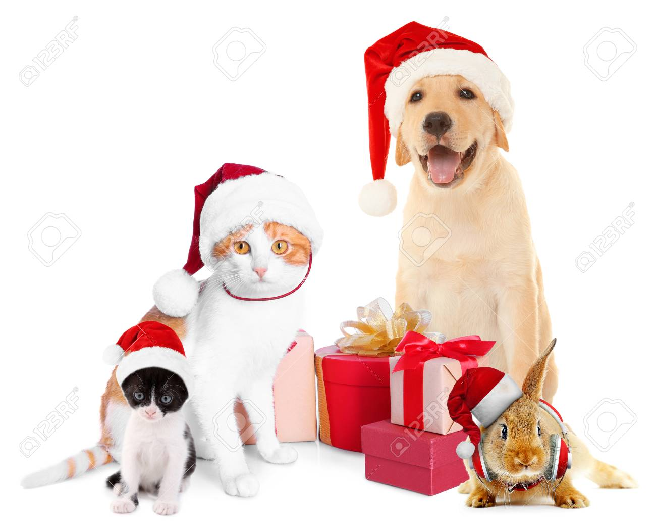 Funny pets in Santa hats with Christmas gifts on white background Stock Photo - 92122157  sc 1 st  123RF.com & Funny Pets In Santa Hats With Christmas Gifts On White Background ...