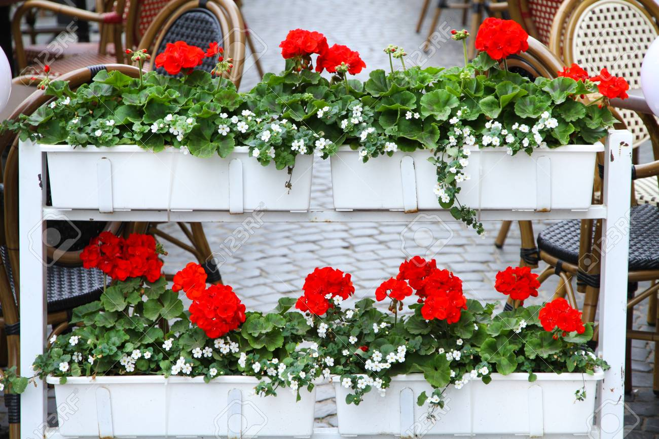 Beautiful Flower Beds On Terrace Of Cafe Stock Photo Picture And