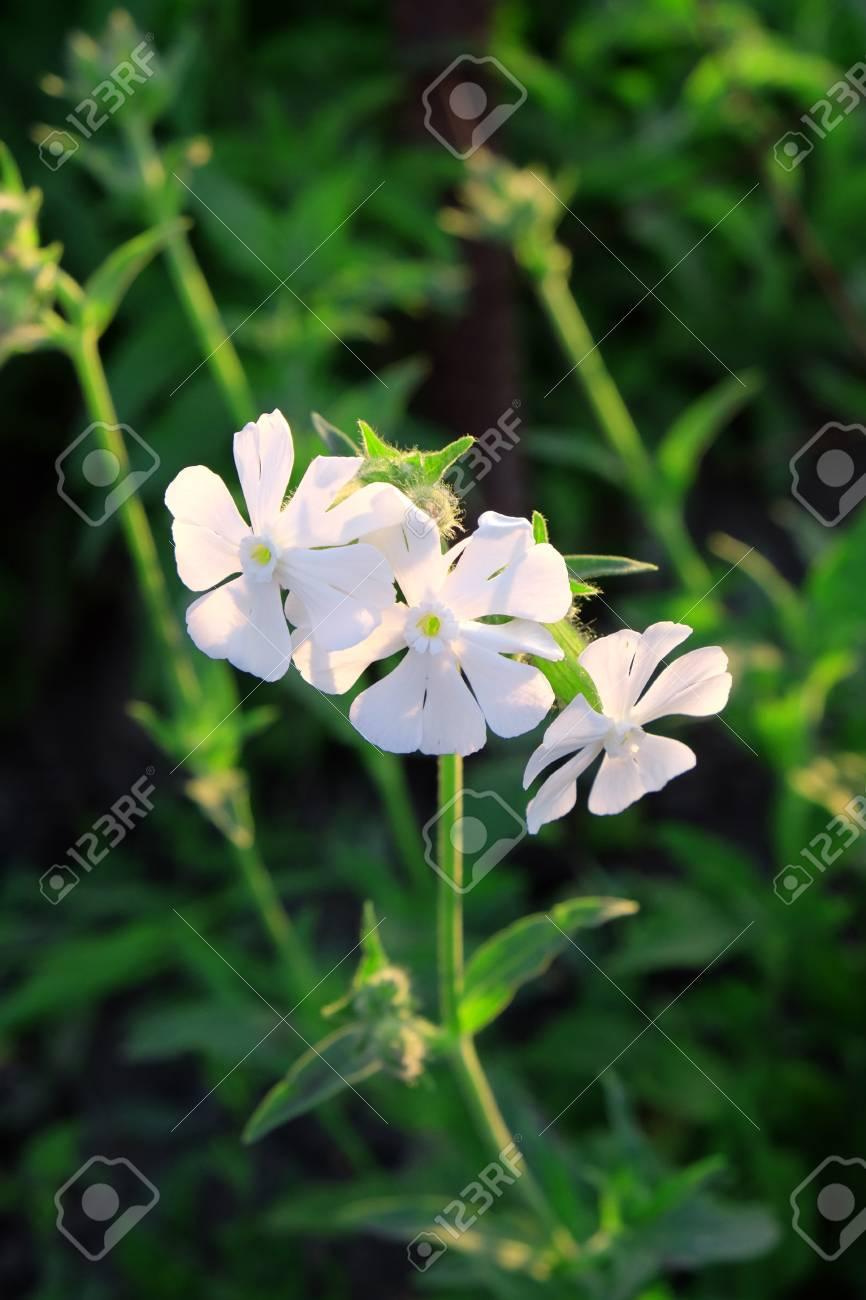 Fresh White Flowers In Garden Fotos Retratos Imgenes Y Fotografa