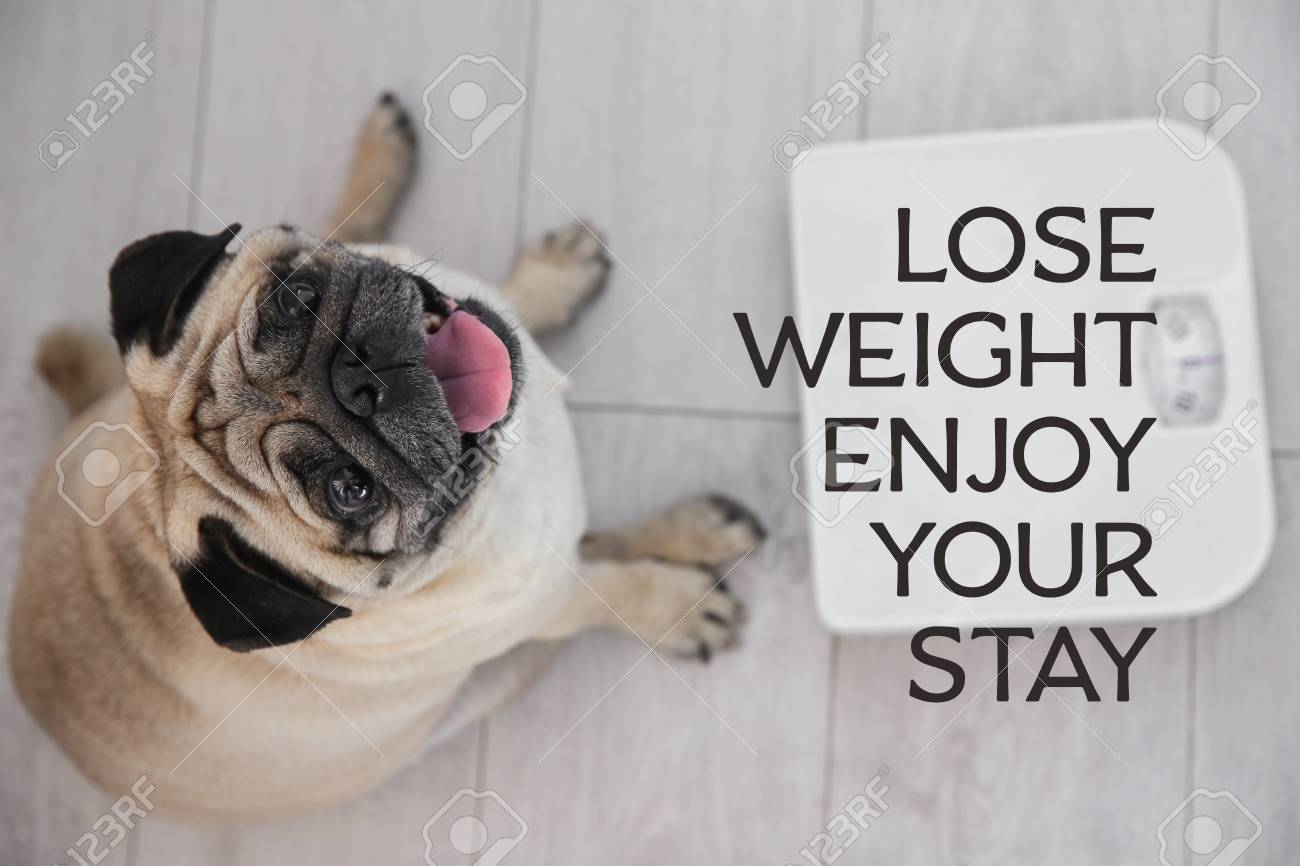 Motivation Quote Lose Weight Enjoy Your Stay And Cute Overweight