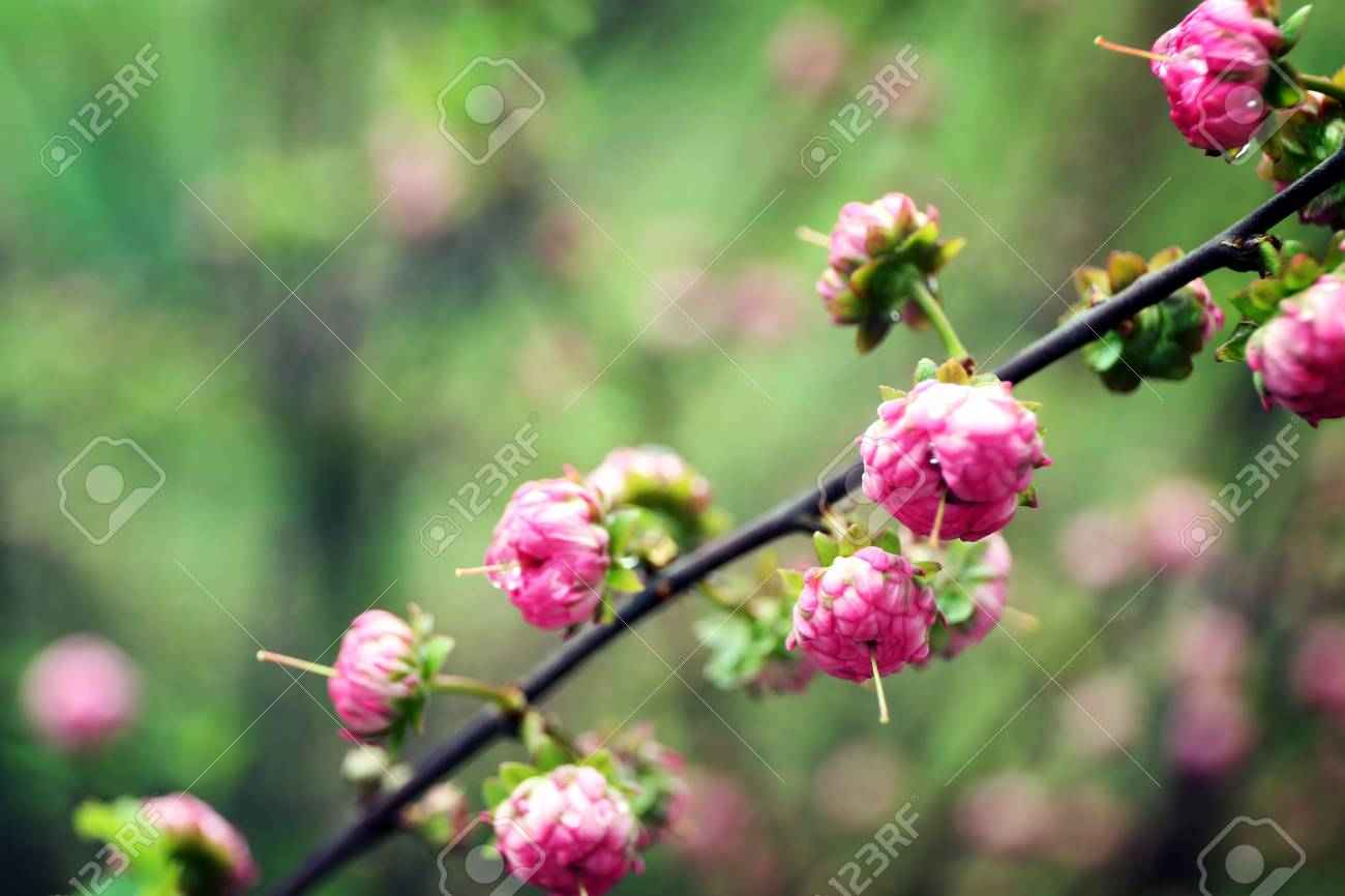 Branch With Beautiful Blooming Flowers On Blurred Background Stock