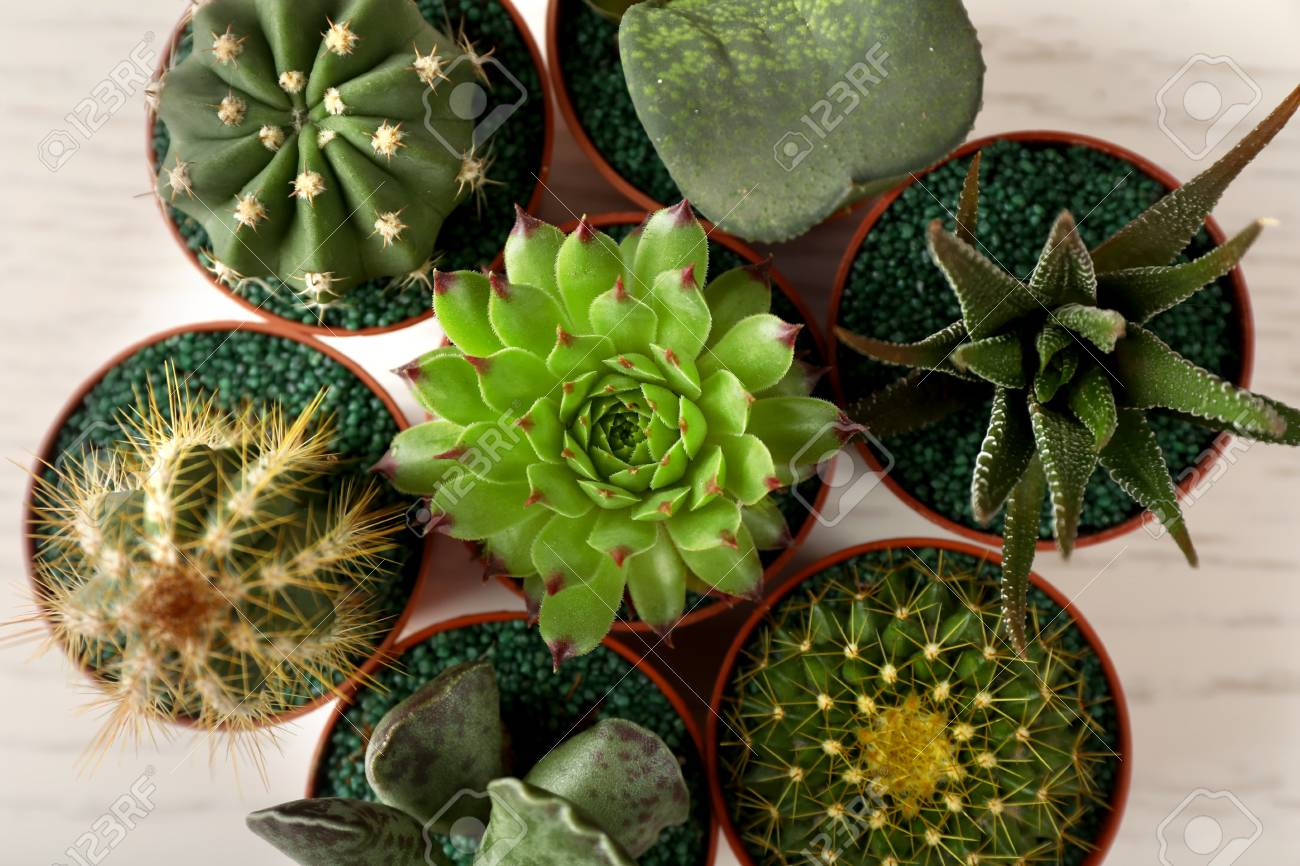 different succulents and cactus in pots top view stock photo