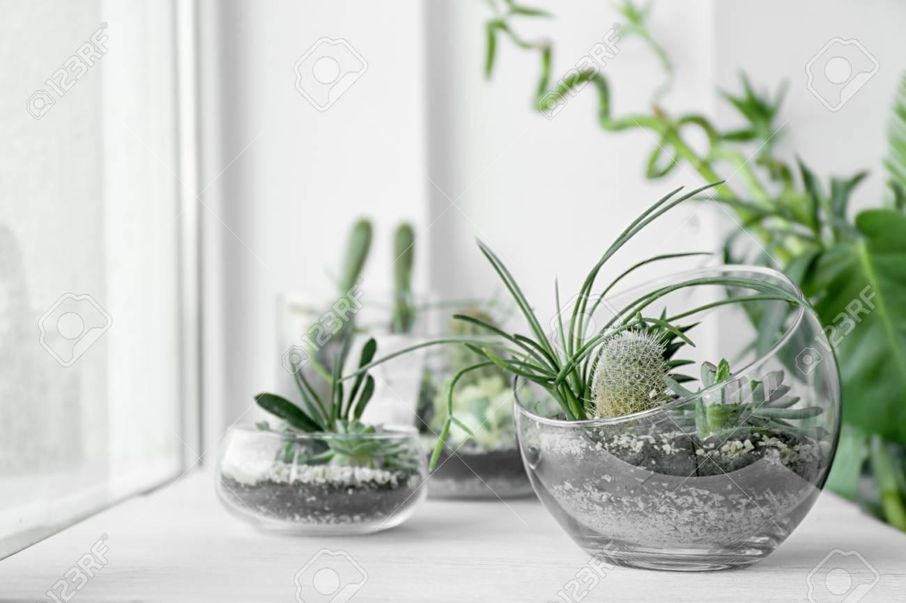 Mini succulent garden in glass terrarium on windowsill - 97653309