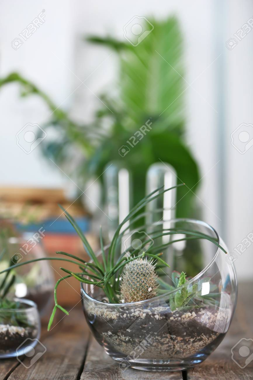 Mini Succulent Garden In Glass Terrarium On Wooden Table Stock Photo Picture And Royalty Free Image Image 97654523