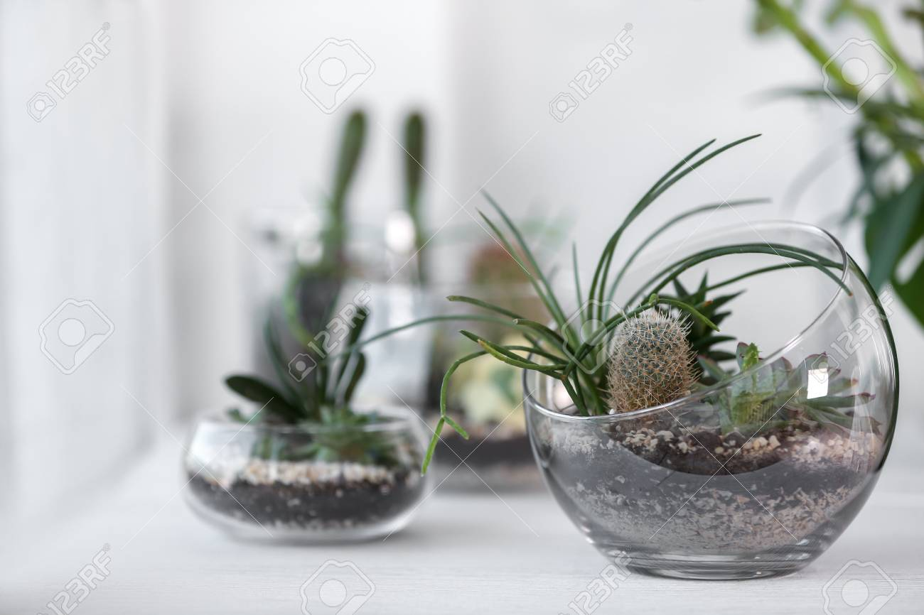 Mini Succulent Garden In Glass Terrarium On Windowsill Stock Photo