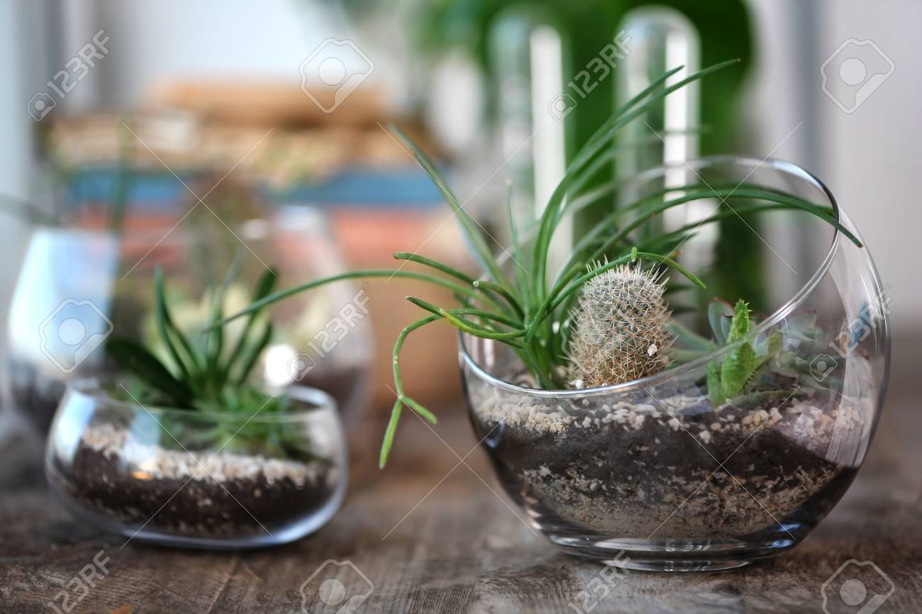 Mini Succulent Garden In Glass Terrarium On Wooden Table Stock Photo