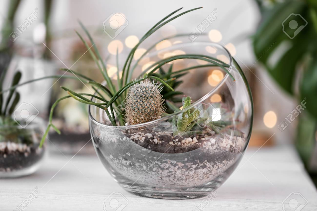 Mini Succulent Garden In Glass Terrarium On Windowsill Stock Photo Picture And Royalty Free Image Image 97654009