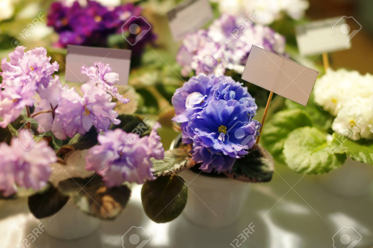 Flower Pots With Beautiful Plant On Blurred Background Stock Photo