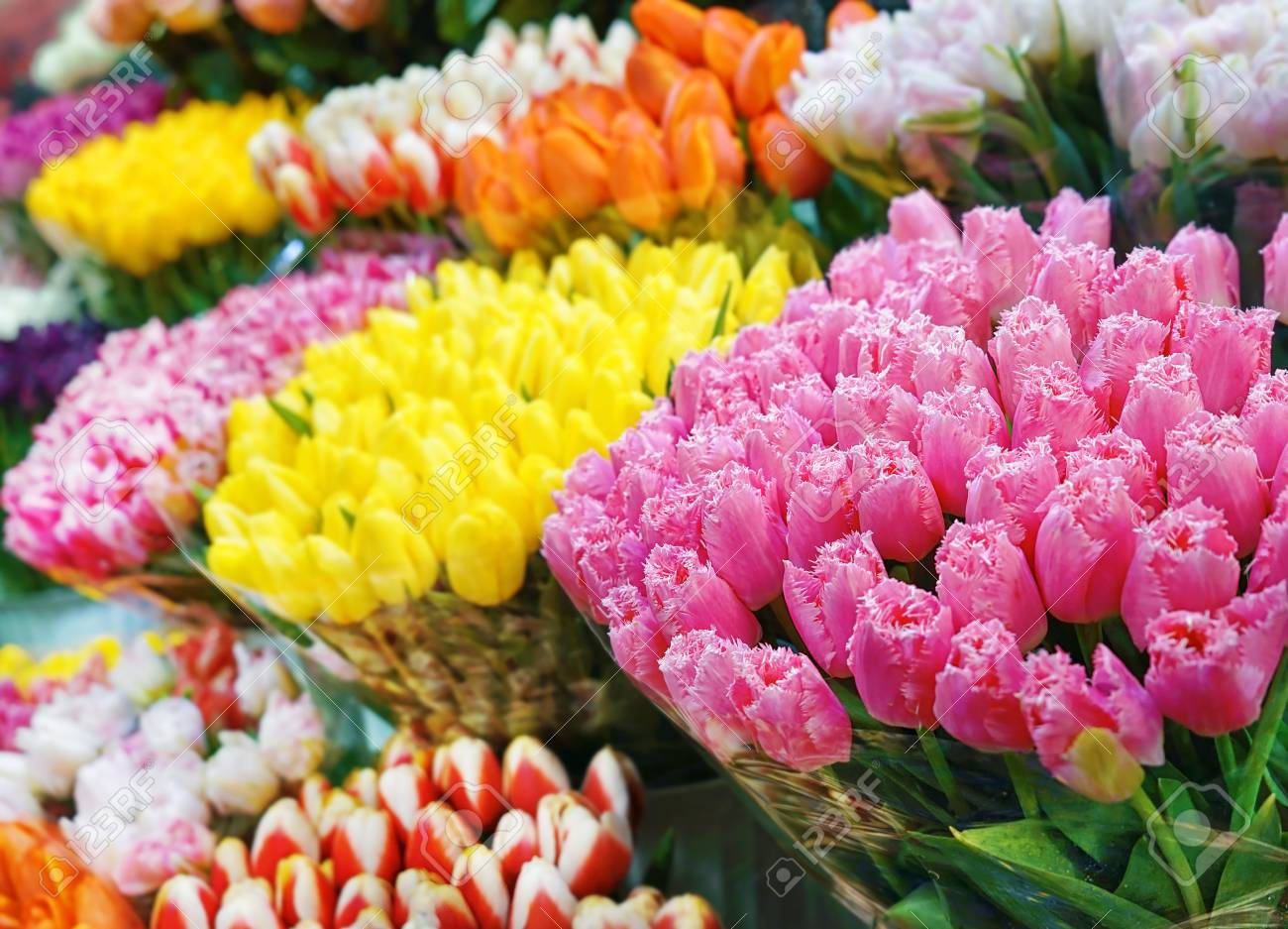 Assortment of beautiful flowers at floral shop stock photo picture assortment of beautiful flowers at floral shop stock photo 97641545 izmirmasajfo
