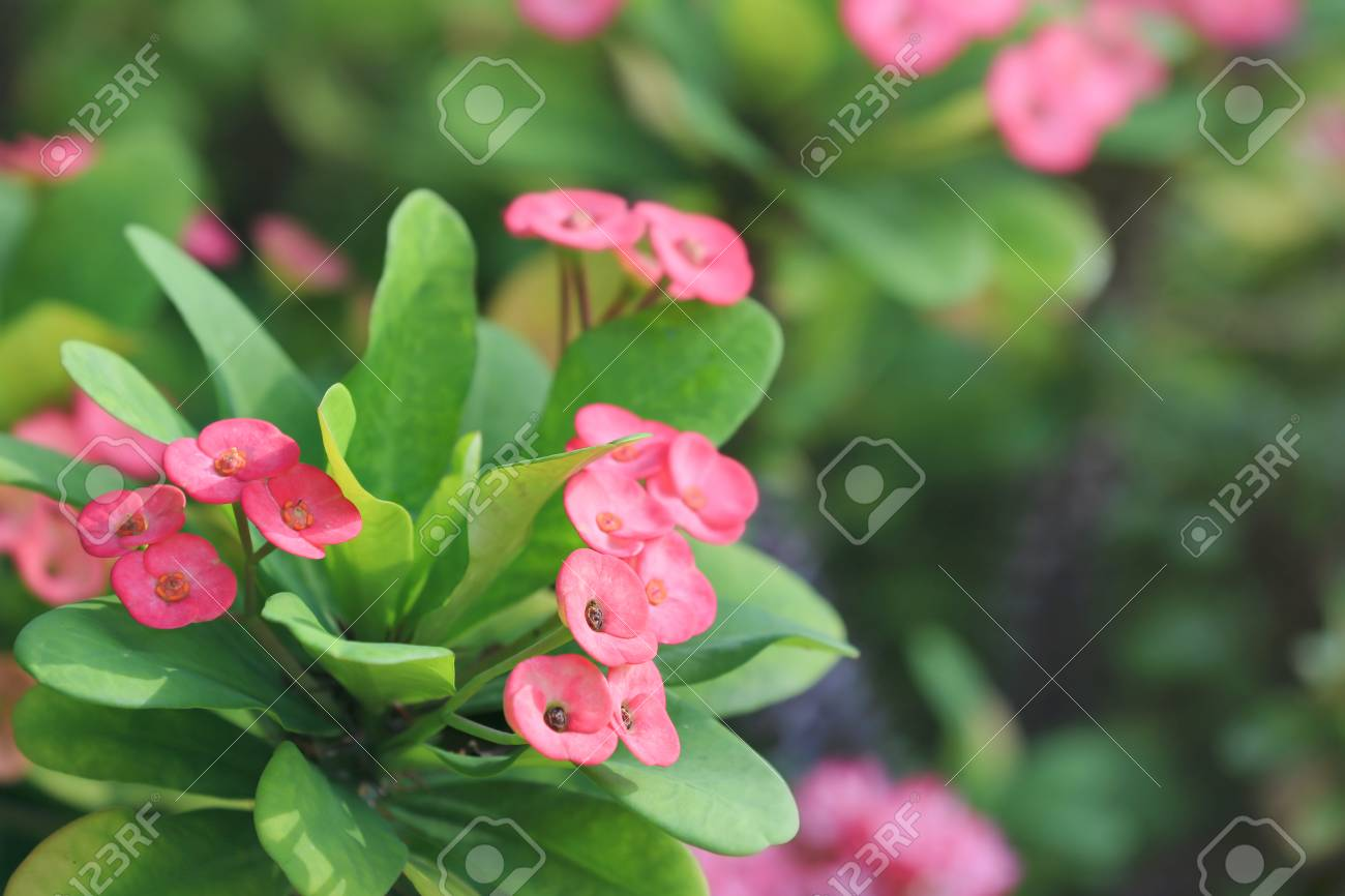 Beautiful tropical flowers outdoors stock photo picture and royalty beautiful tropical flowers outdoors stock photo 98257501 izmirmasajfo