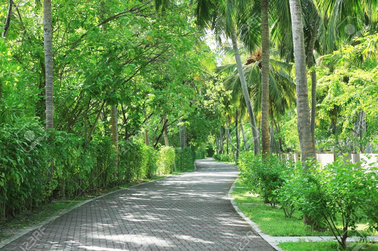 Schöne Gasse Mit Tropischen Pflanzen Im Botanischen Garten