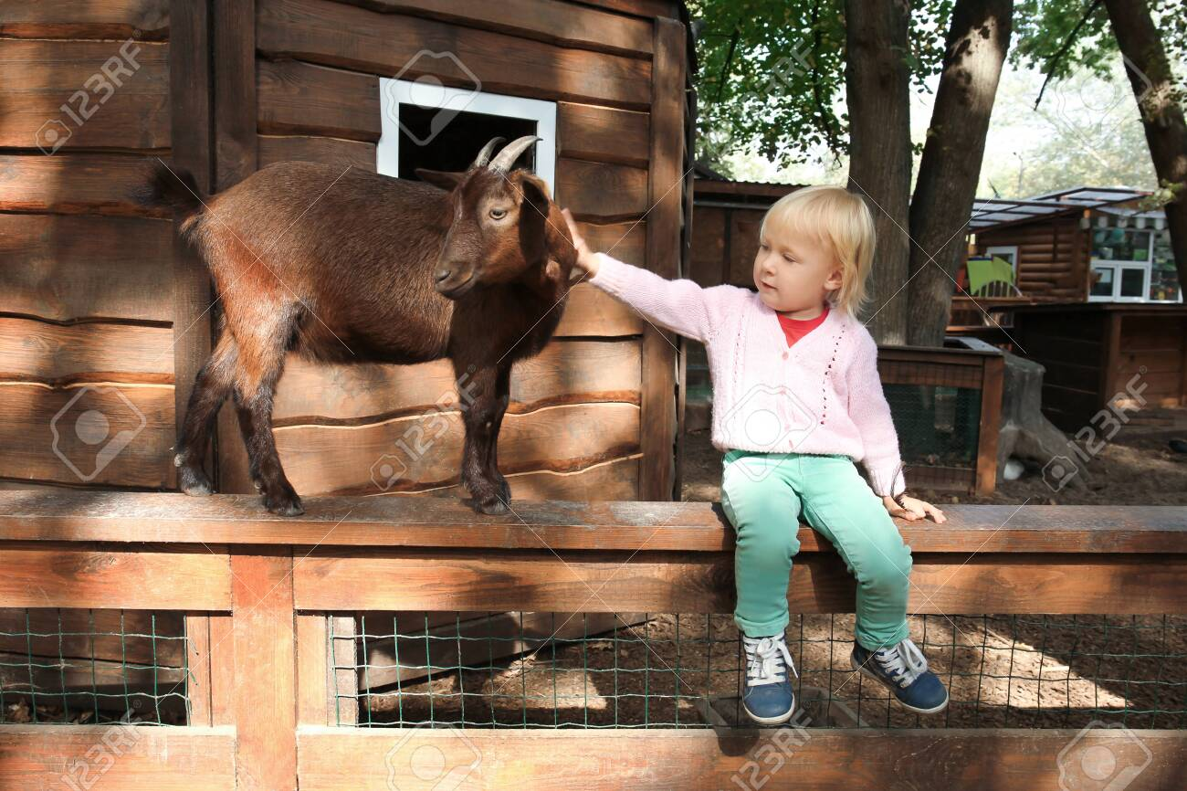 Cute little girl with funny goat sitting on wooden fence in petting zoo - 99083639