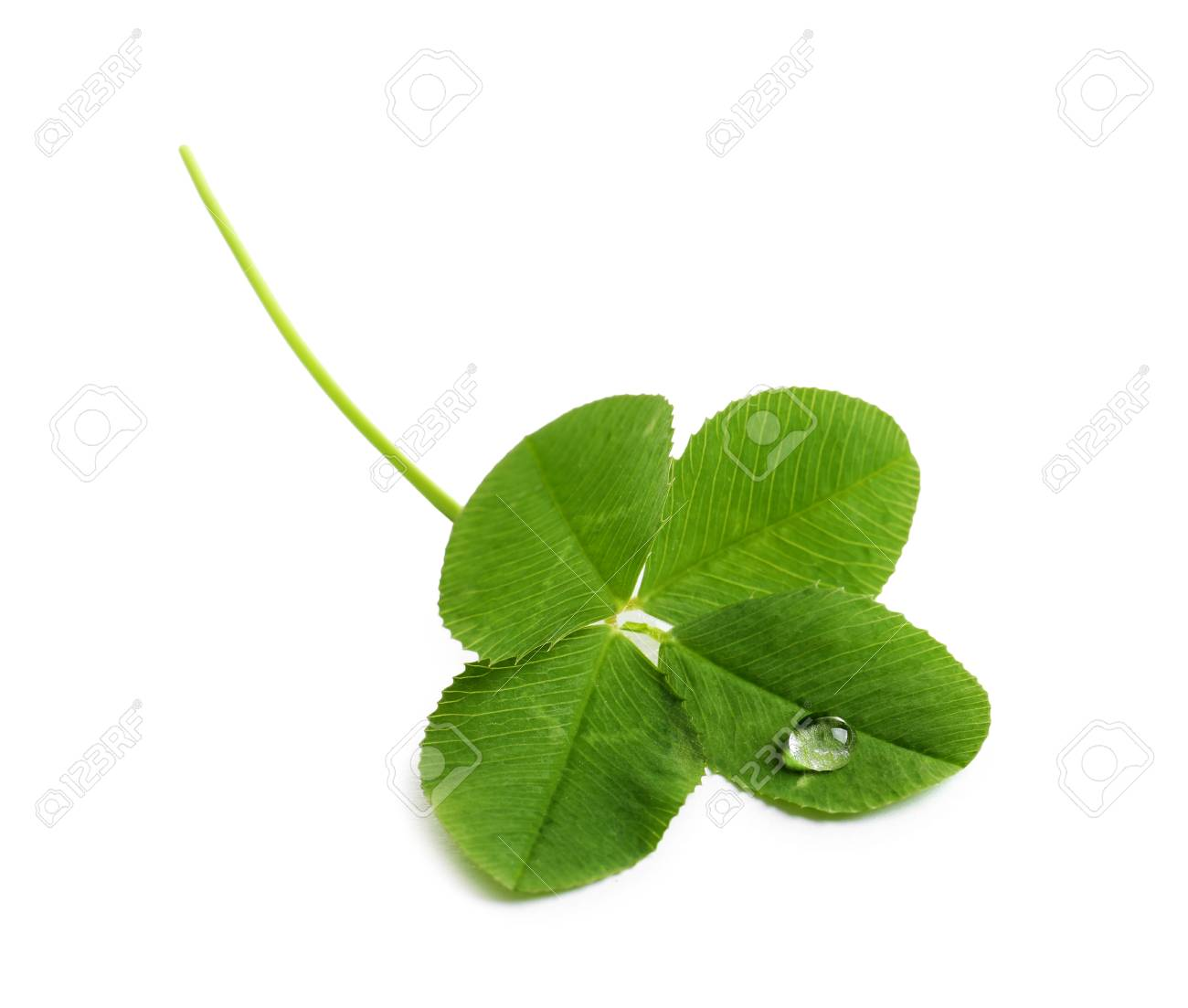 Green four-leaf clover on white background - 106506723