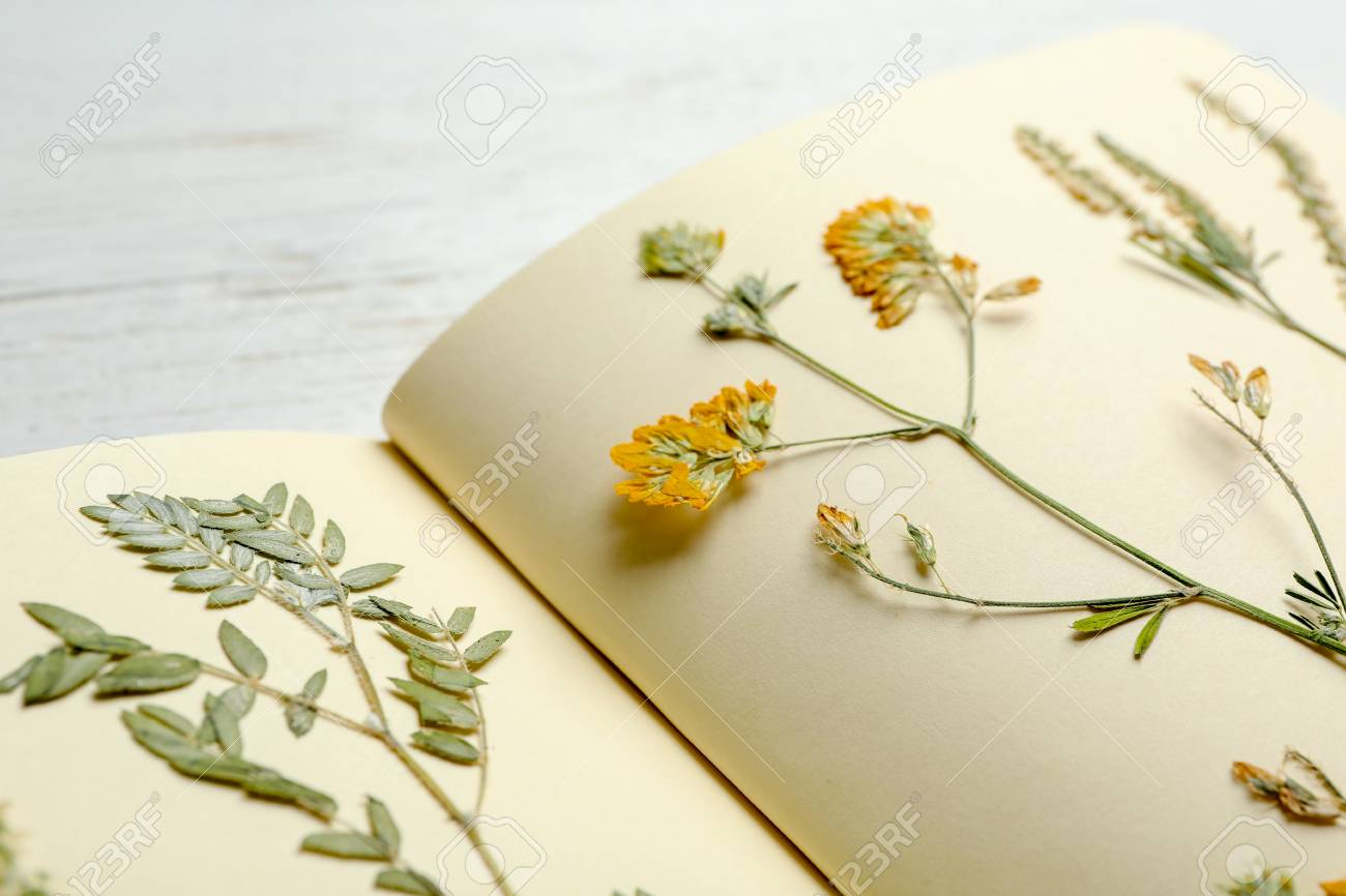 Wild dried meadow flowers in notebook on table, closeup - 106786371