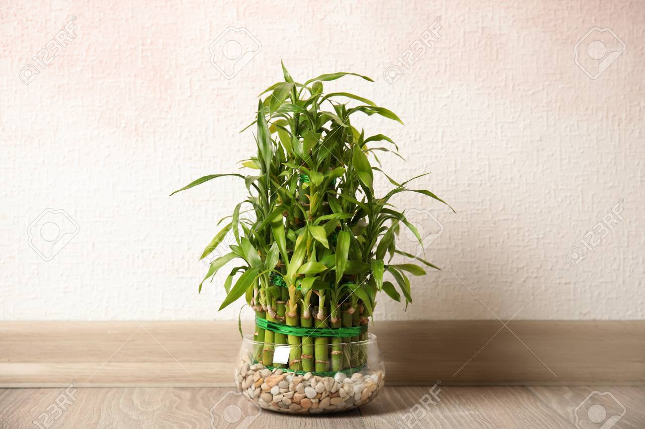 Green bamboo in glass bowl near color wall - 112648541