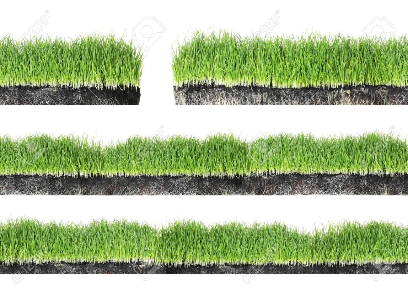 Set of fresh green grass on white background - 121108674