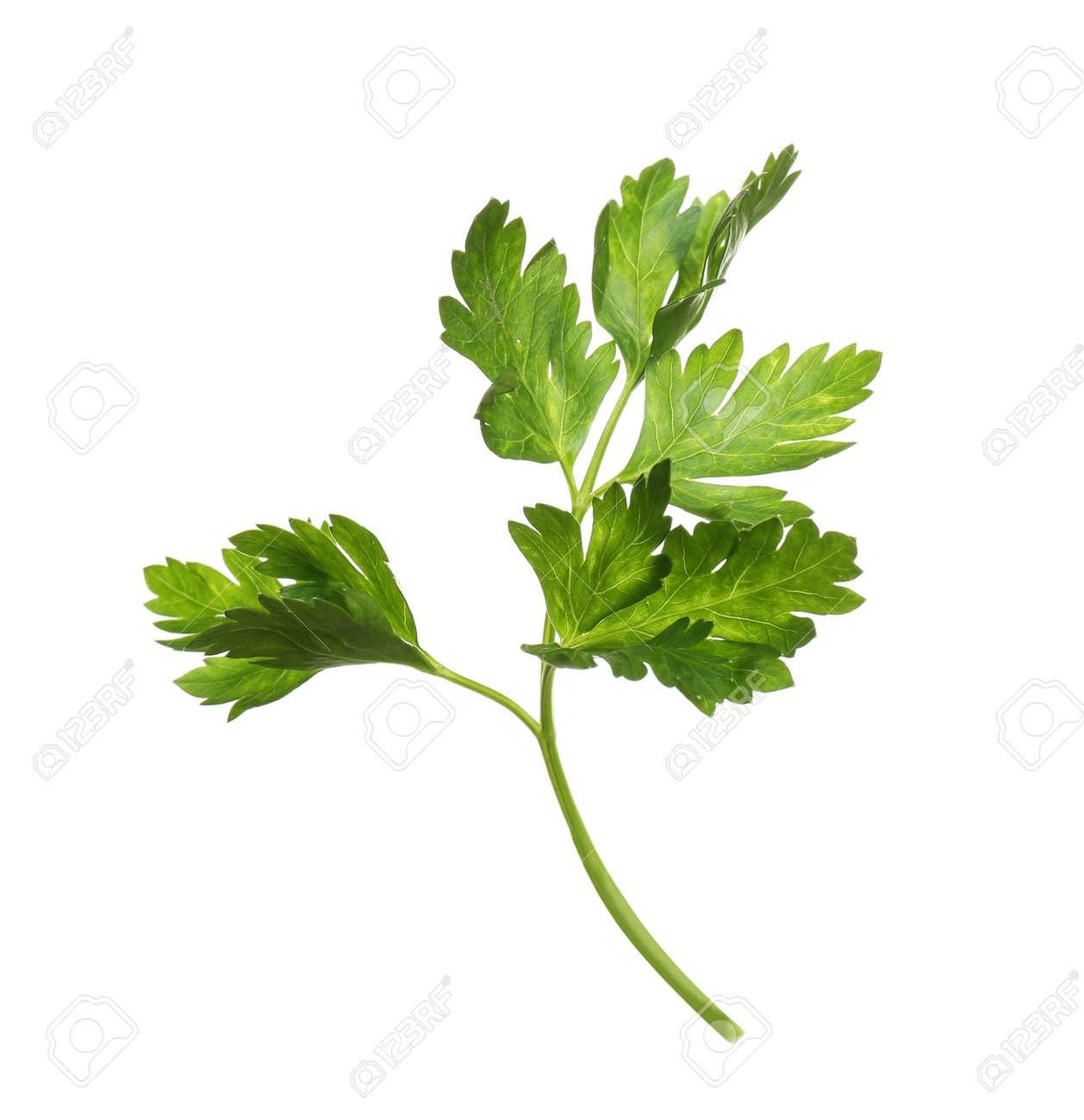 Fresh green organic parsley on white background - 125039797