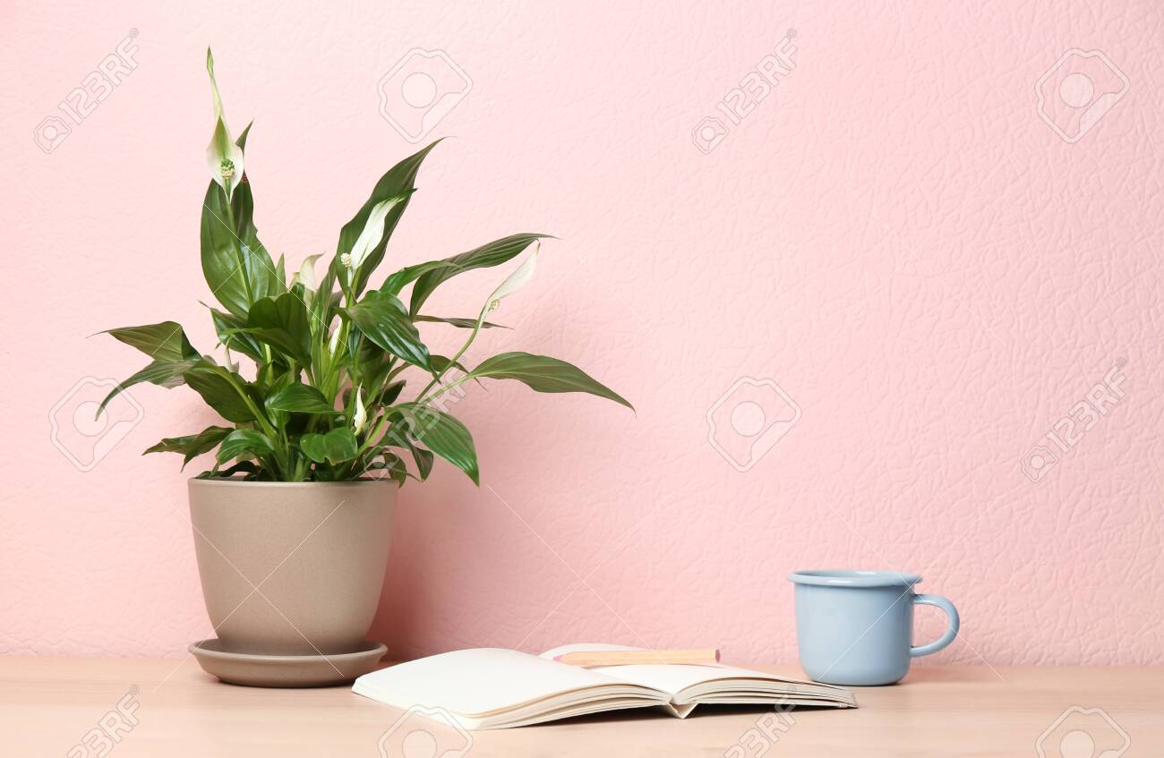 Potted peace lily plant, cup and notebook on wooden table near color wall. Space for text - 126092040