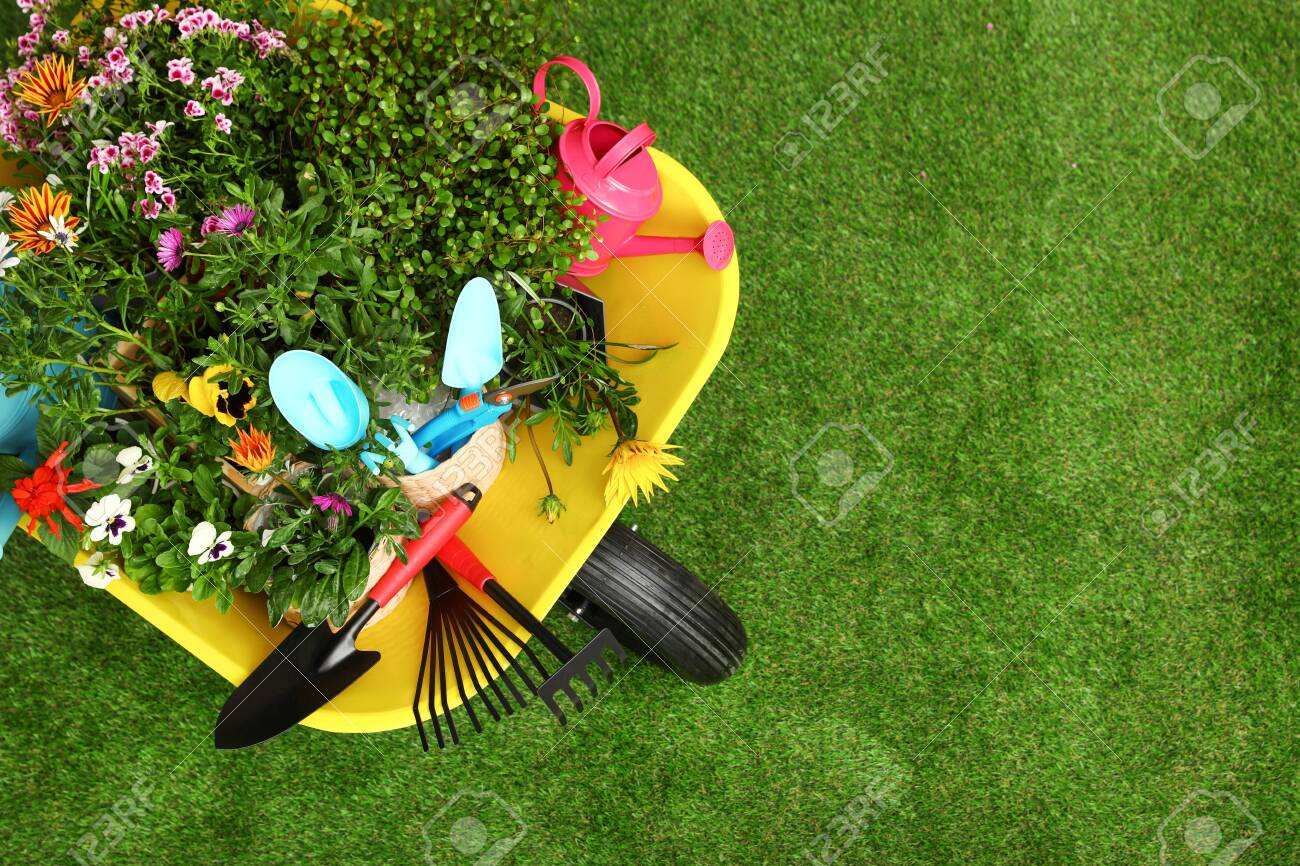 Wheelbarrow with flowers and gardening tools on grass, top view. Space for text - 126147129