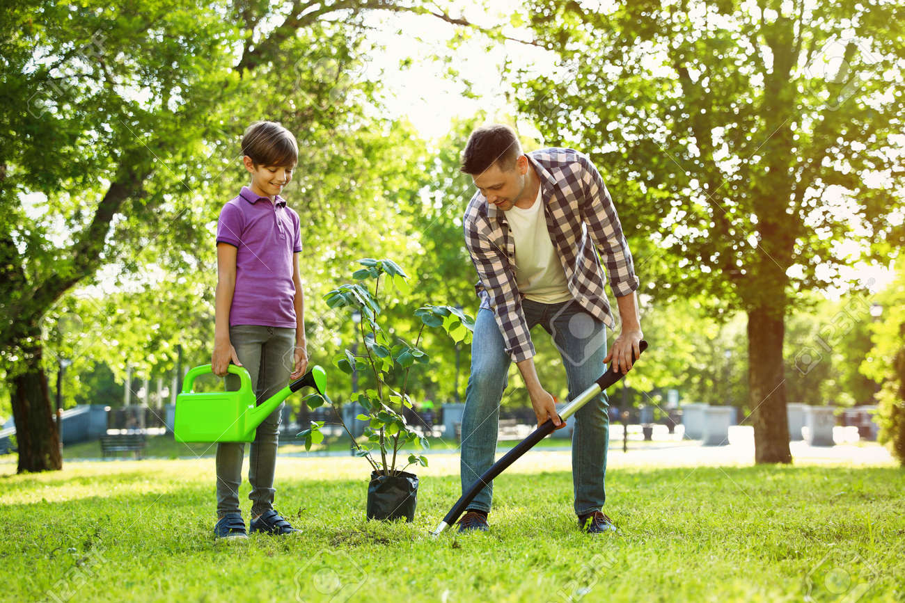 Dad and son planting tree together in park on sunny day - 126809821