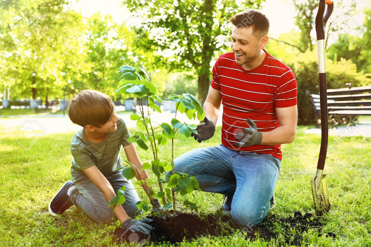 Dad and son planting tree together in park on sunny day - 126742745