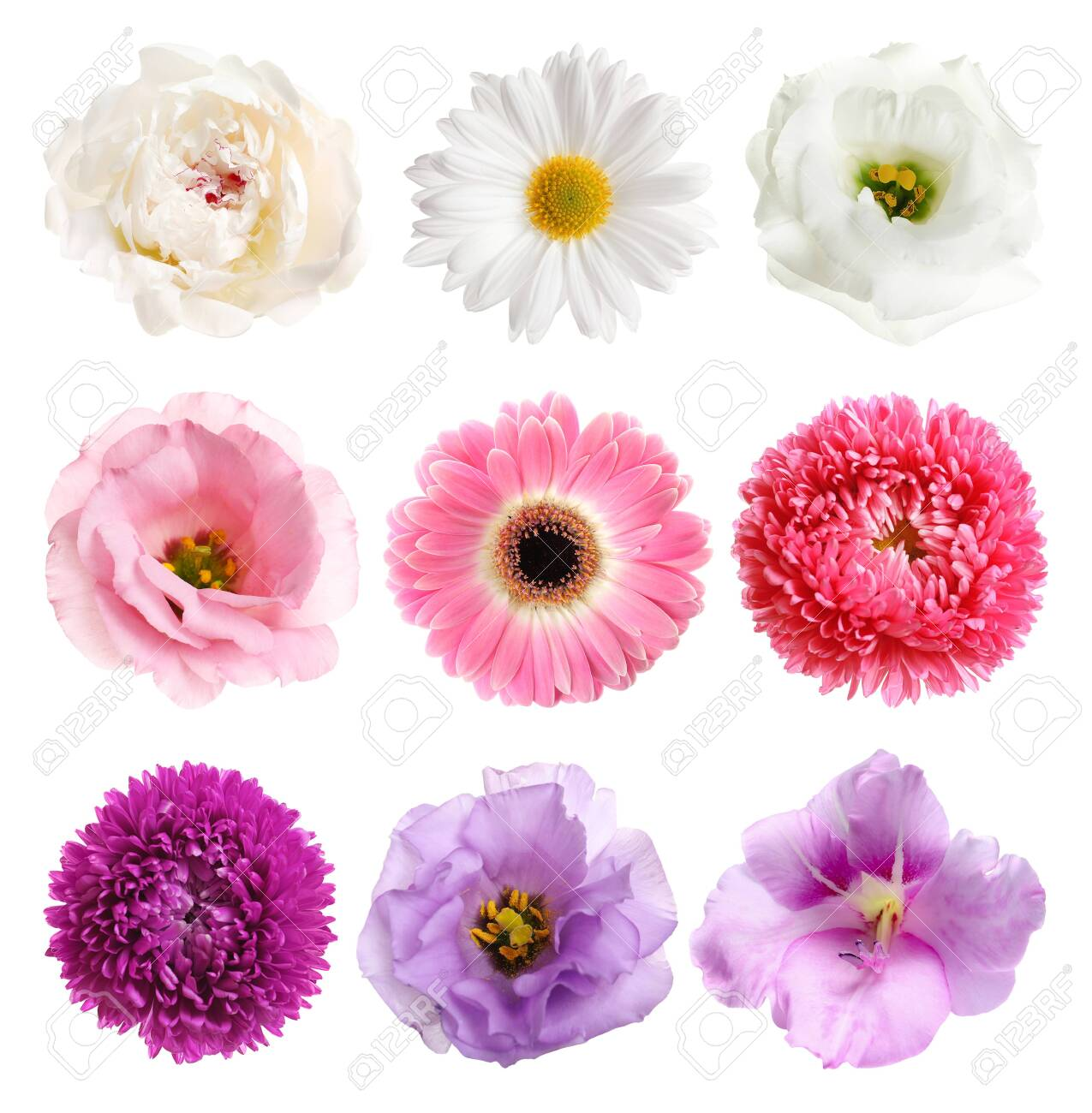 Set of different beautiful flowers on white background - 128190687