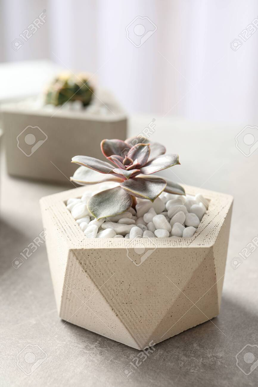 Beautiful Succulent Plant In Stylish Flowerpot On Table Home Stock Photo Picture And Royalty Free Image Image 128293896