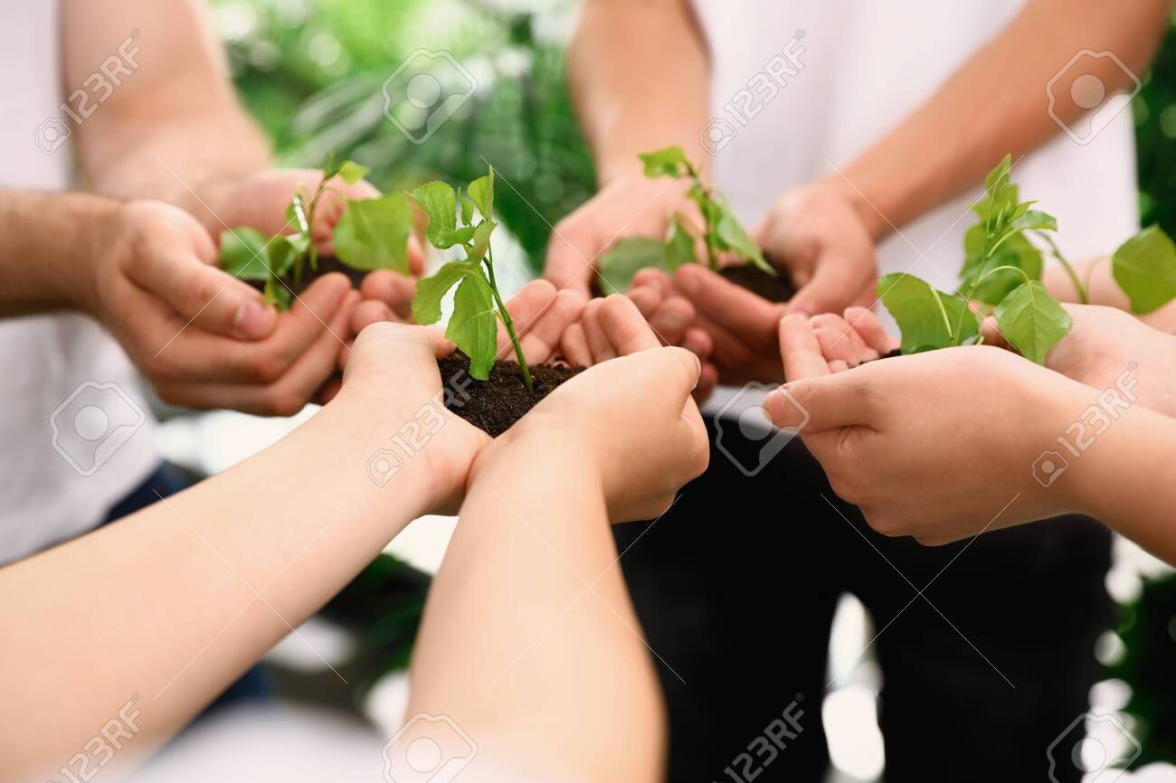 Group of volunteers holding soil with sprouts in hands outdoors, closeup - 128675203