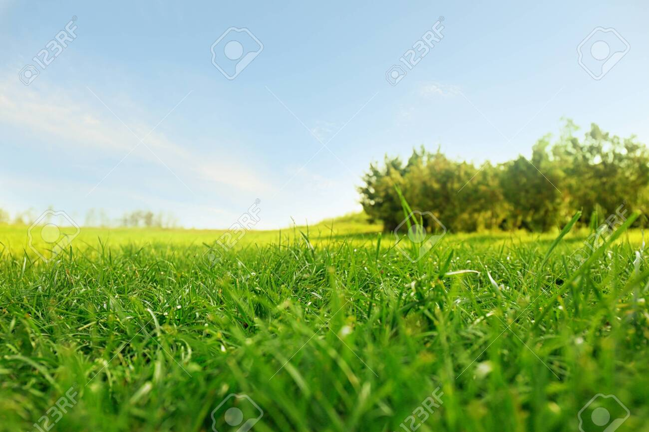 Picturesque landscape with beautiful green lawn on sunny day - 129749852