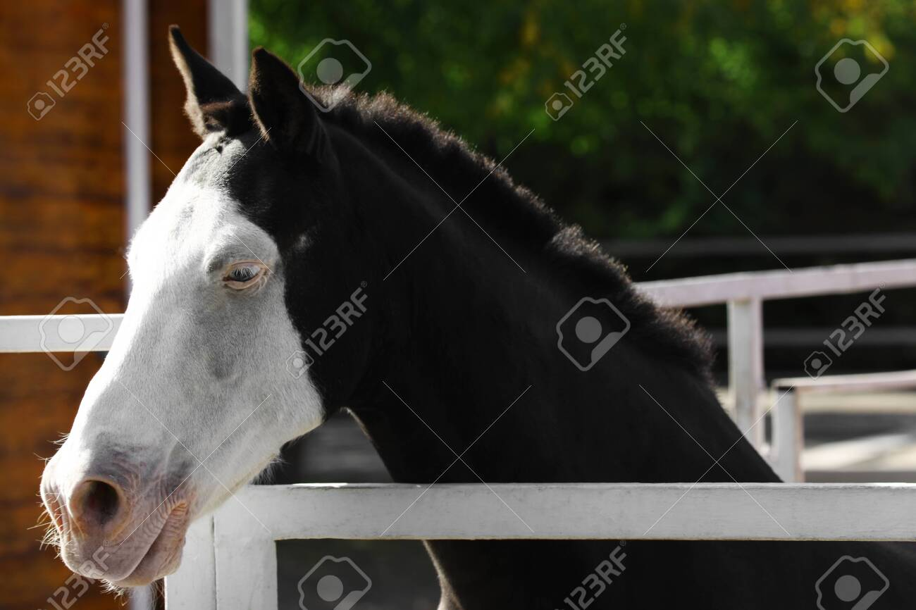 Splashed White Horse At Light Fence Outdoors Stock Photo Picture And Royalty Free Image Image 130585114