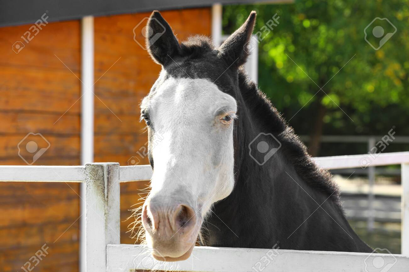 Splashed White Horse At Light Fence Outdoors Stock Photo Picture And Royalty Free Image Image 130561982