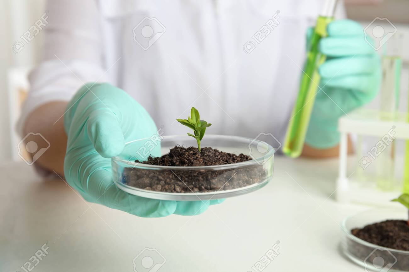 Scientist holding Petri dish with soil and sprouted plant over white table, closeup. Biological chemistry - 133064182