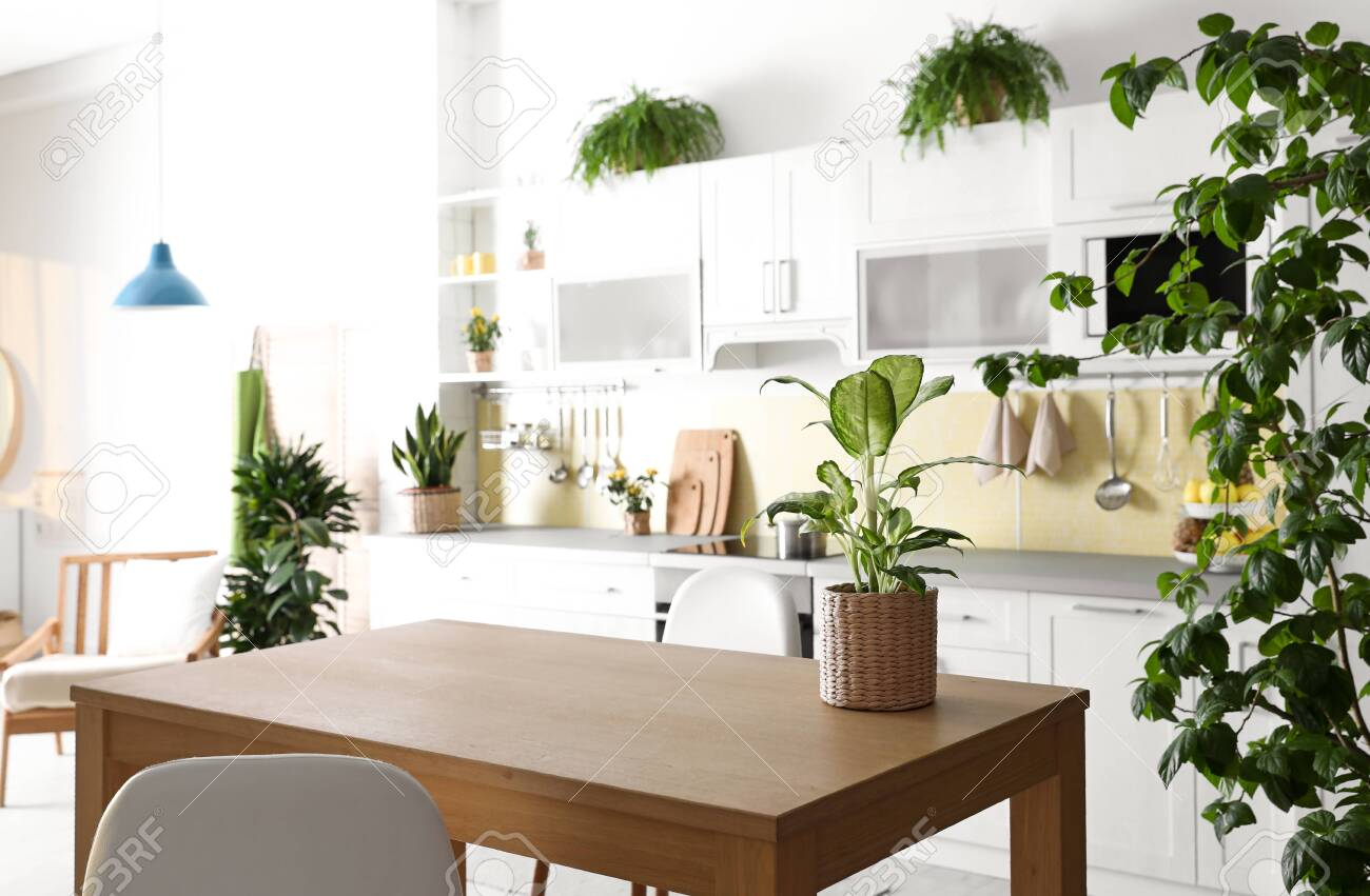 Stylish Kitchen Interior With Green Plants Home Decoration Stock Photo Picture And Royalty Free Image Image 135395186