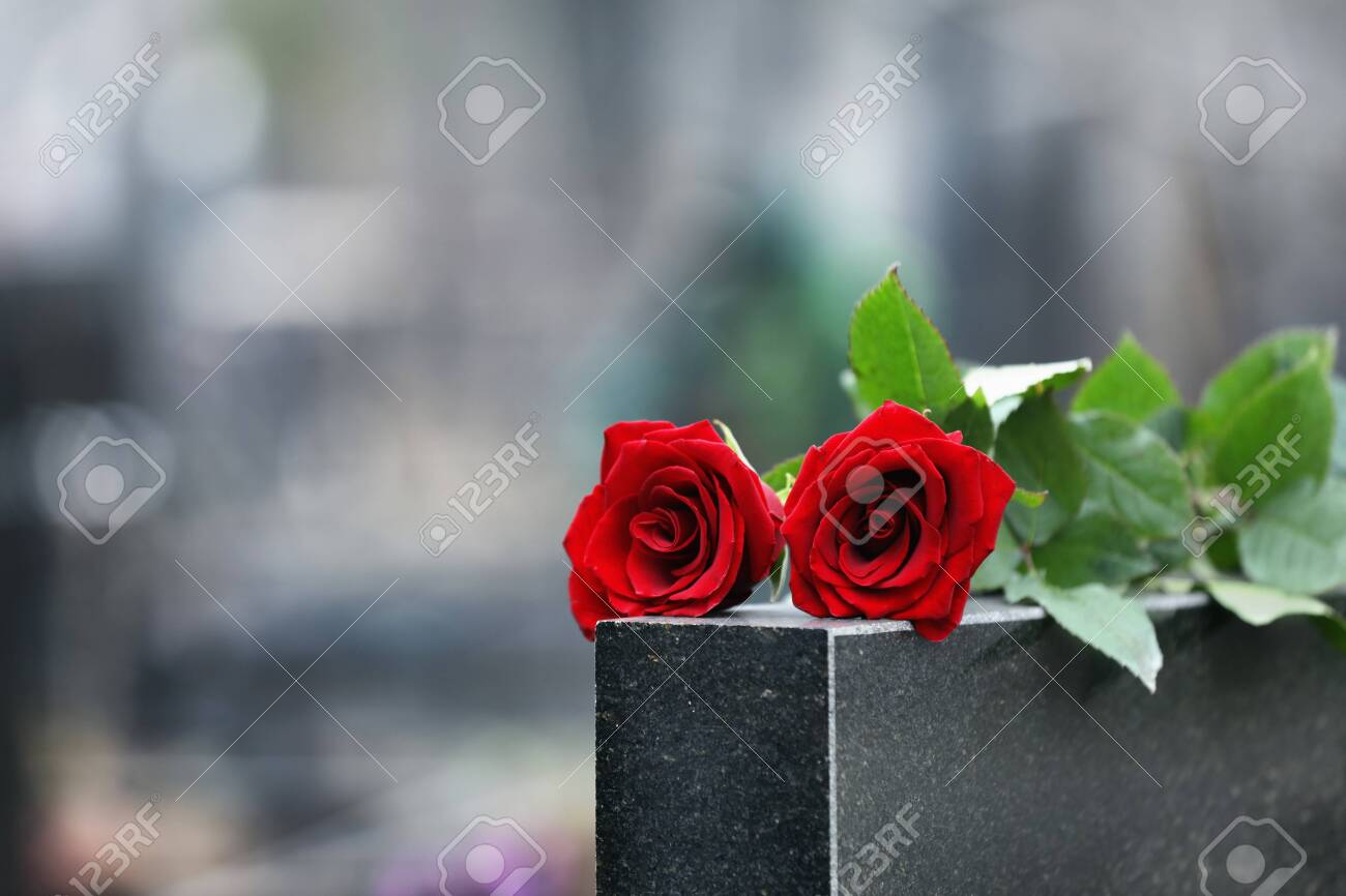 Red roses on black granite tombstone outdoors. Funeral ceremony - 136988222