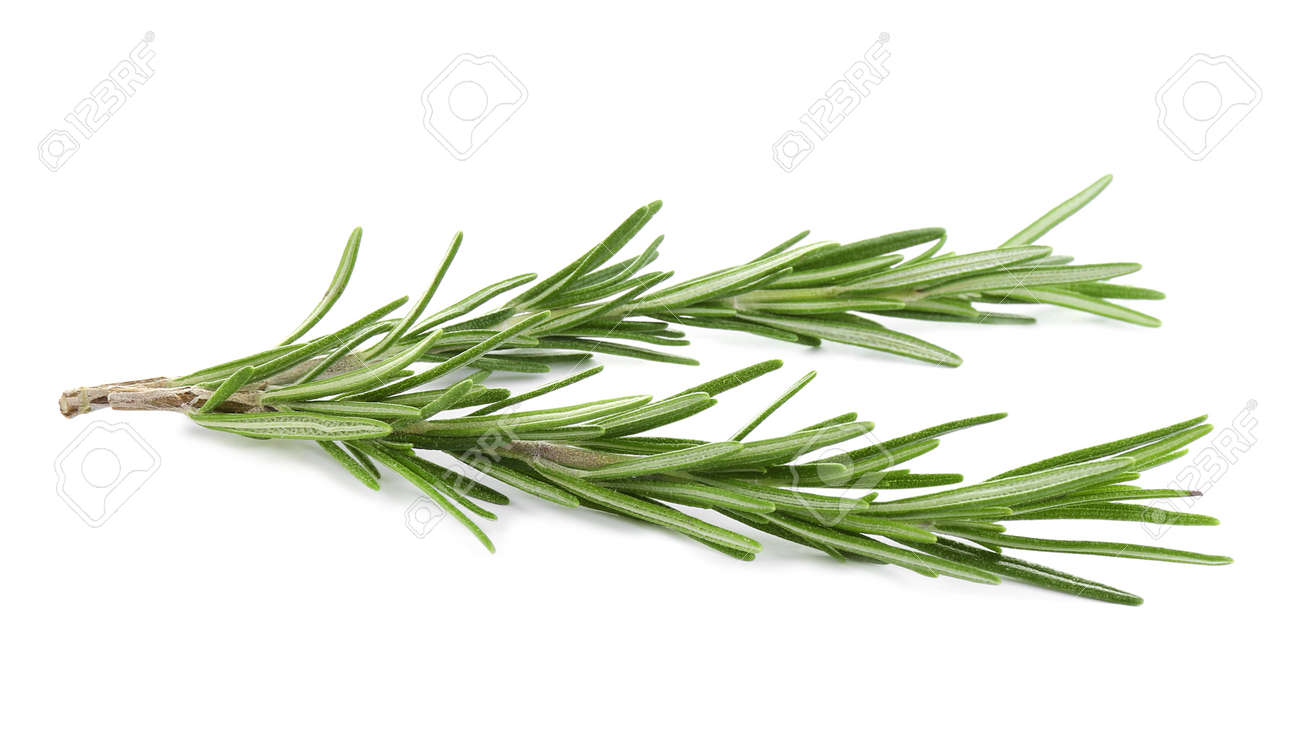 Fresh green rosemary isolated on white. Aromatic herb - 137662125