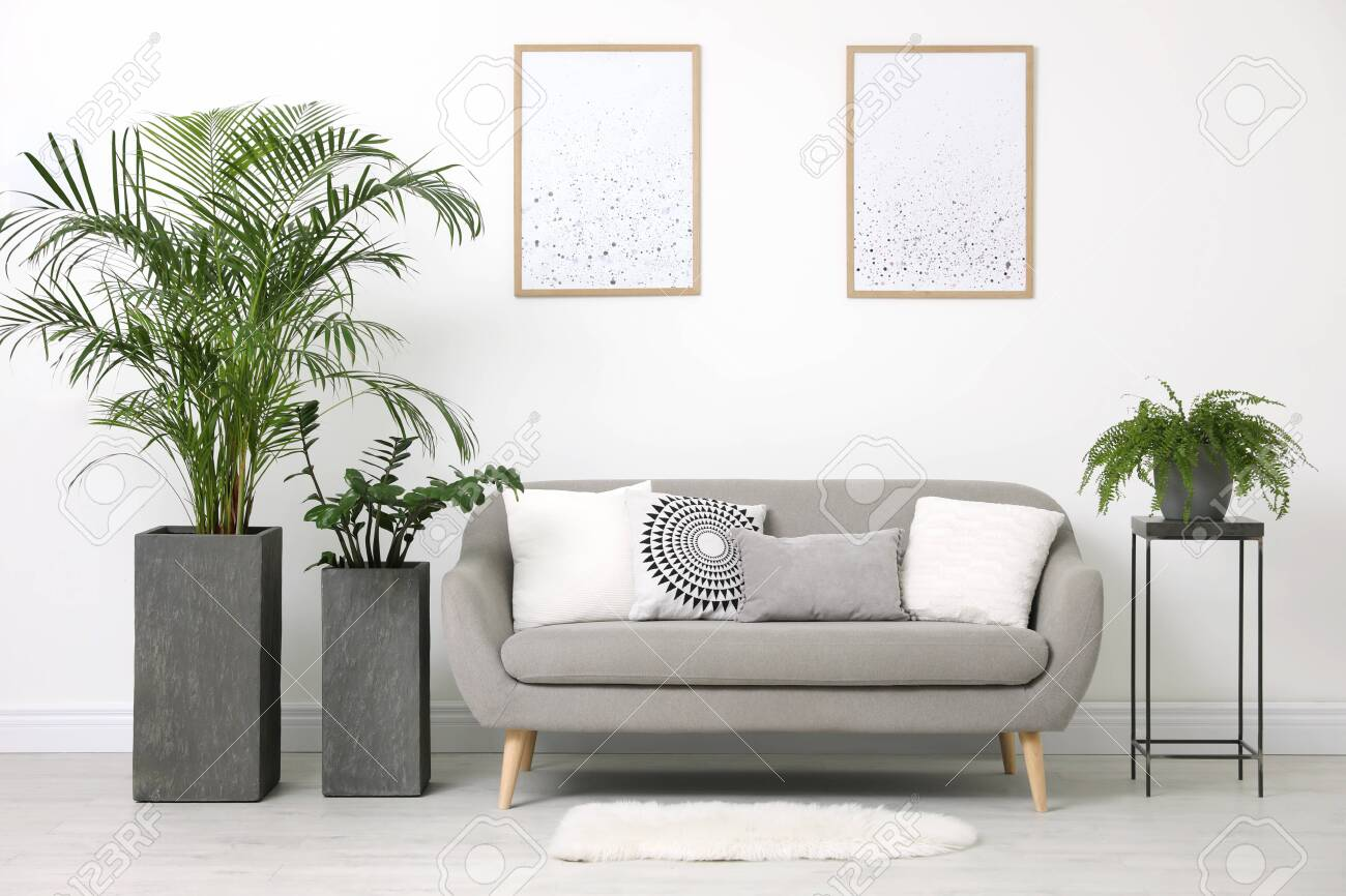 Beautiful Potted Plants In Modern Living Room Stock Photo, Picture And Royalty Free Image. Image 138548619.