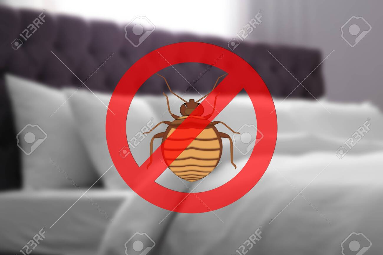 Clean mattress and pillows without bed bugs in room - 140007808