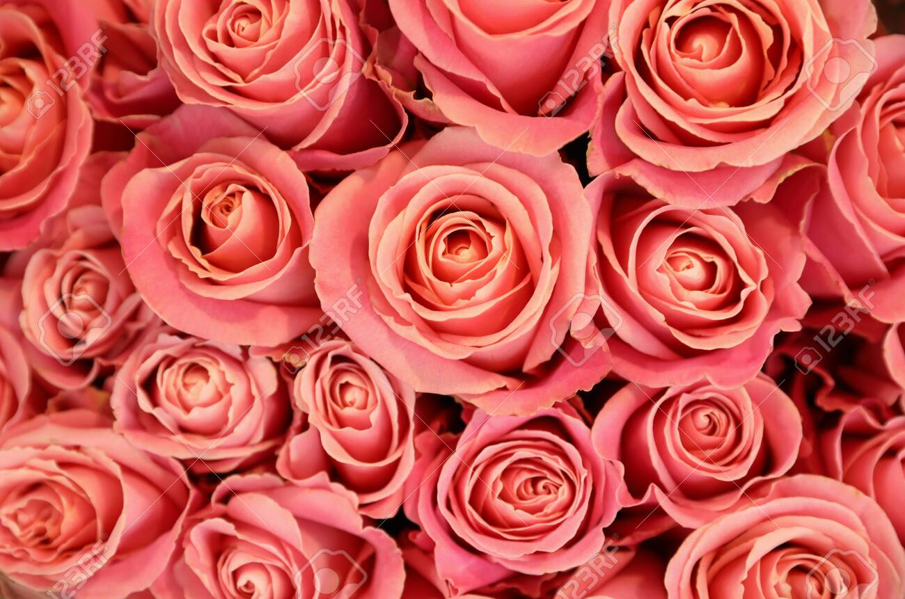 Beautiful pink roses as background, top view. Floral decor - 141391340